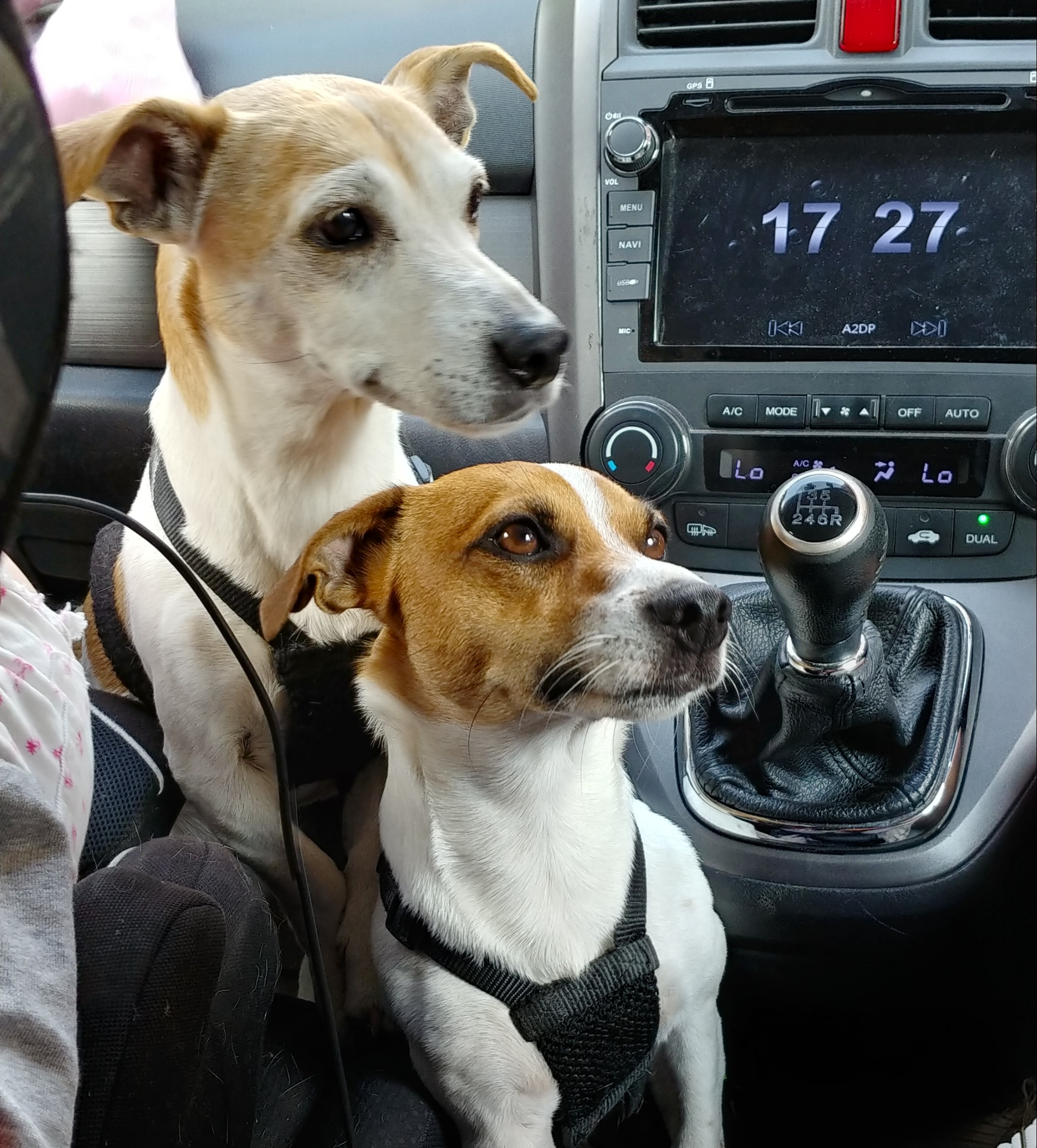 We need a bigger car.