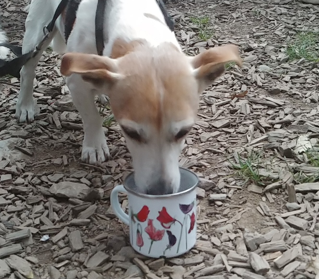 As soon as you put a cup down, someone drinks from it.