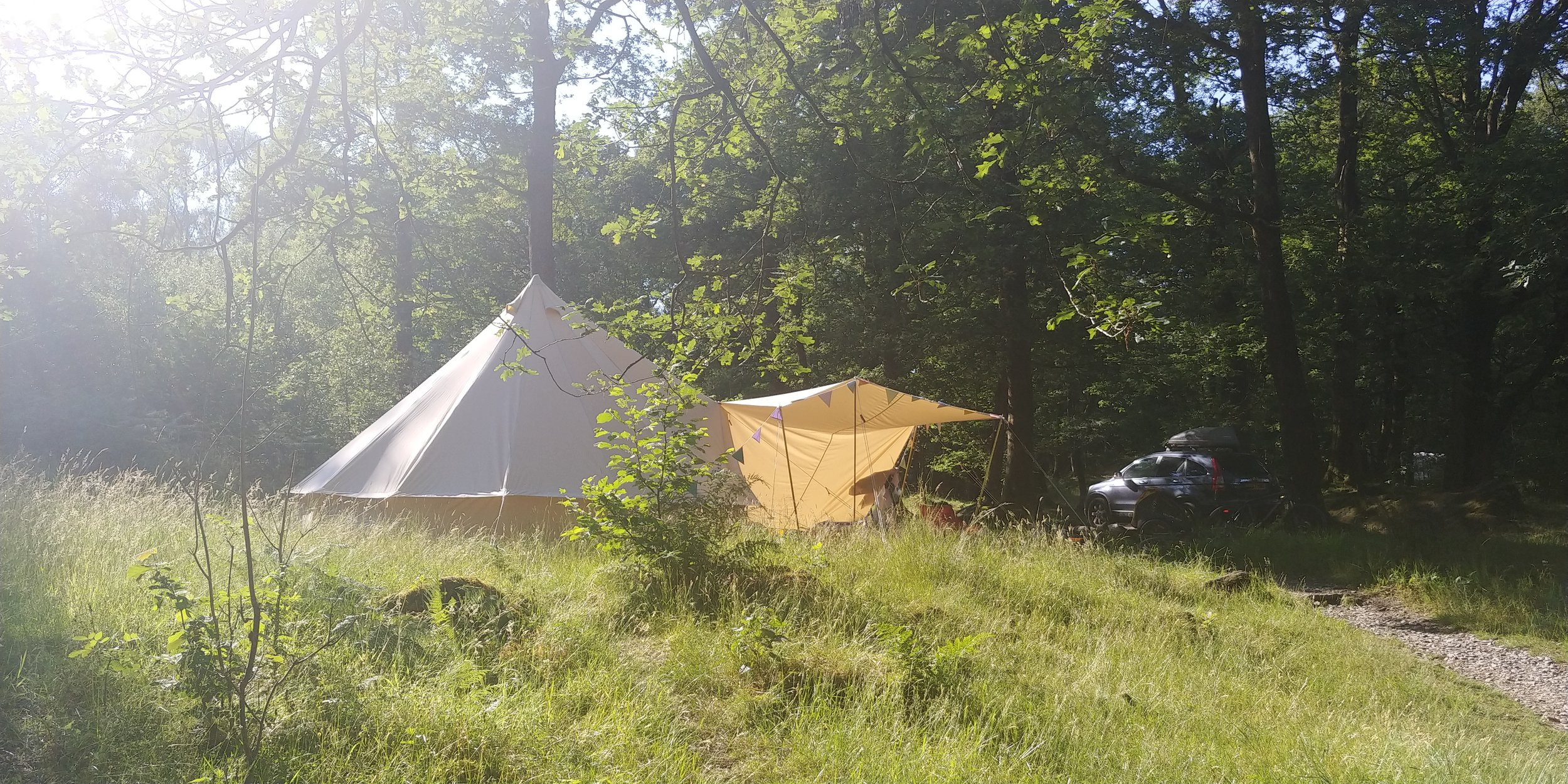 Pretty evening sunshine.
