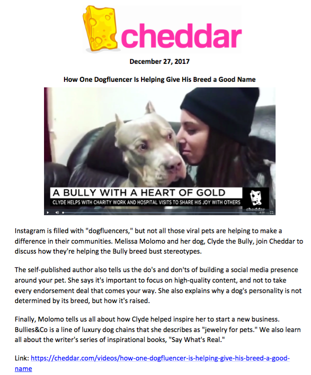 Cheddar  https://cheddar.com/videos/how-one-dogfluencer-is-helping-give-his-breed-a-good-name