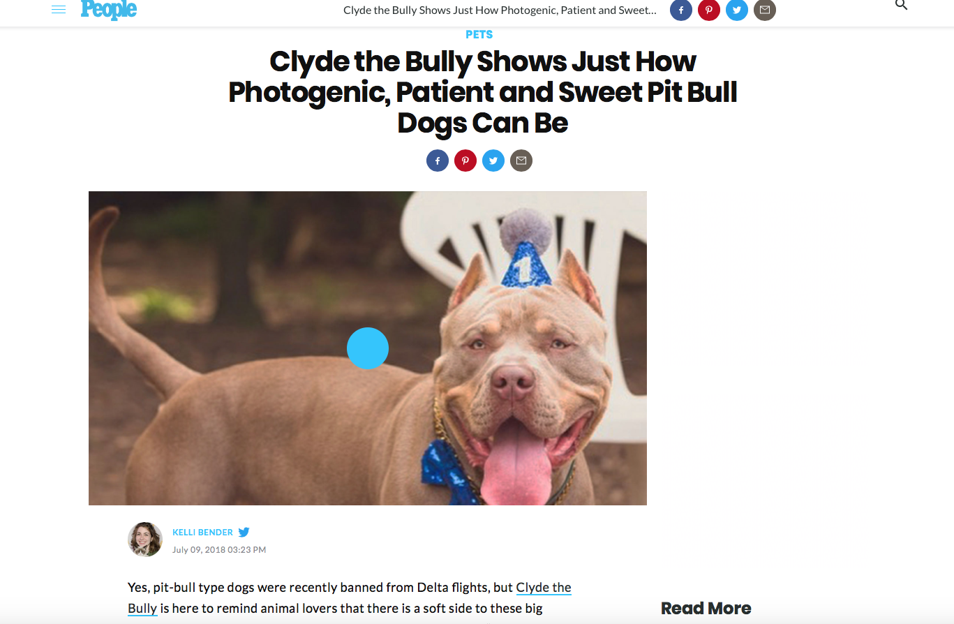 People Magazine!    https://people.com/pets/clyde-the-bully-pit-bull-instagram/
