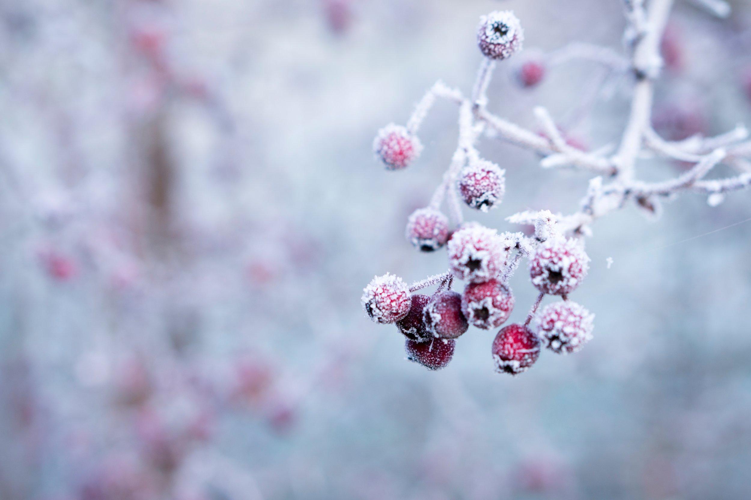 Seasonal Affective Disorder - Christy Nichol
