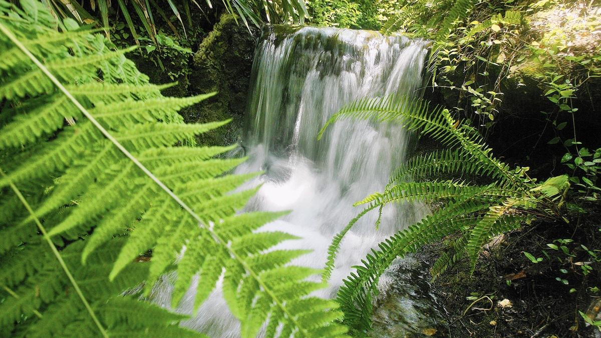 """Orlando Sentinel  // Operation GeoTour    """"Waterfalls are the main attraction at Rainbow Springs"""""""