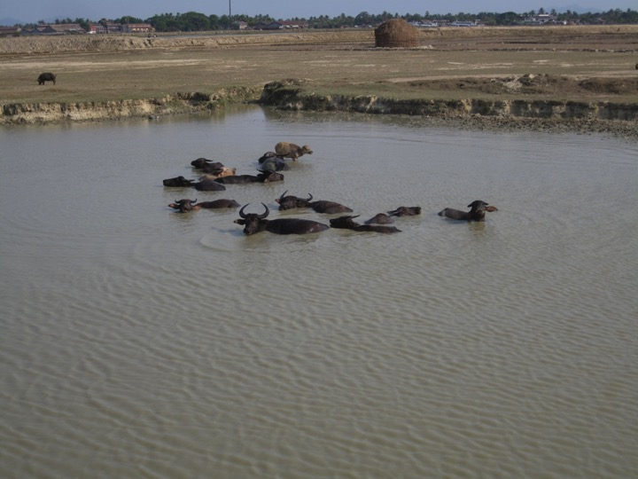 Without access to clean water - They often use the same filthy water the animals bathe in