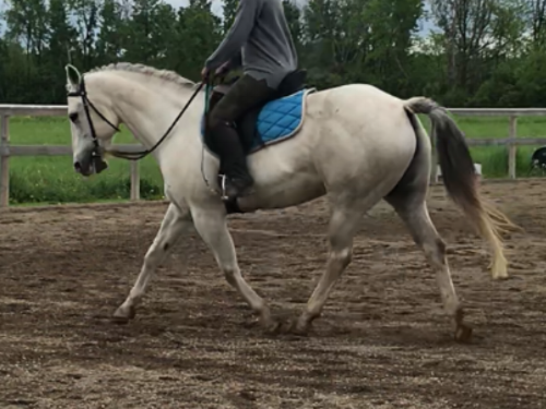 (Yes, I know I have a chair seat and floppy reins but would you look at that little mare trying her heart out to be bigger than she is!?)