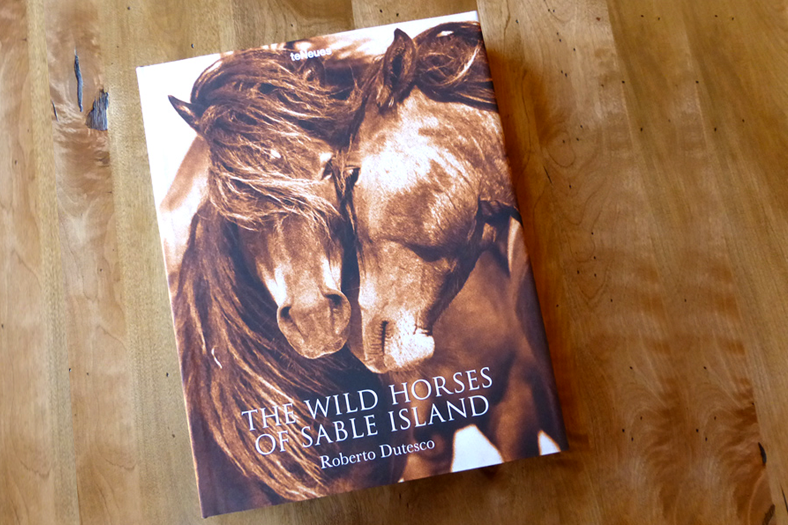 The wild Horses of Sable Island.png