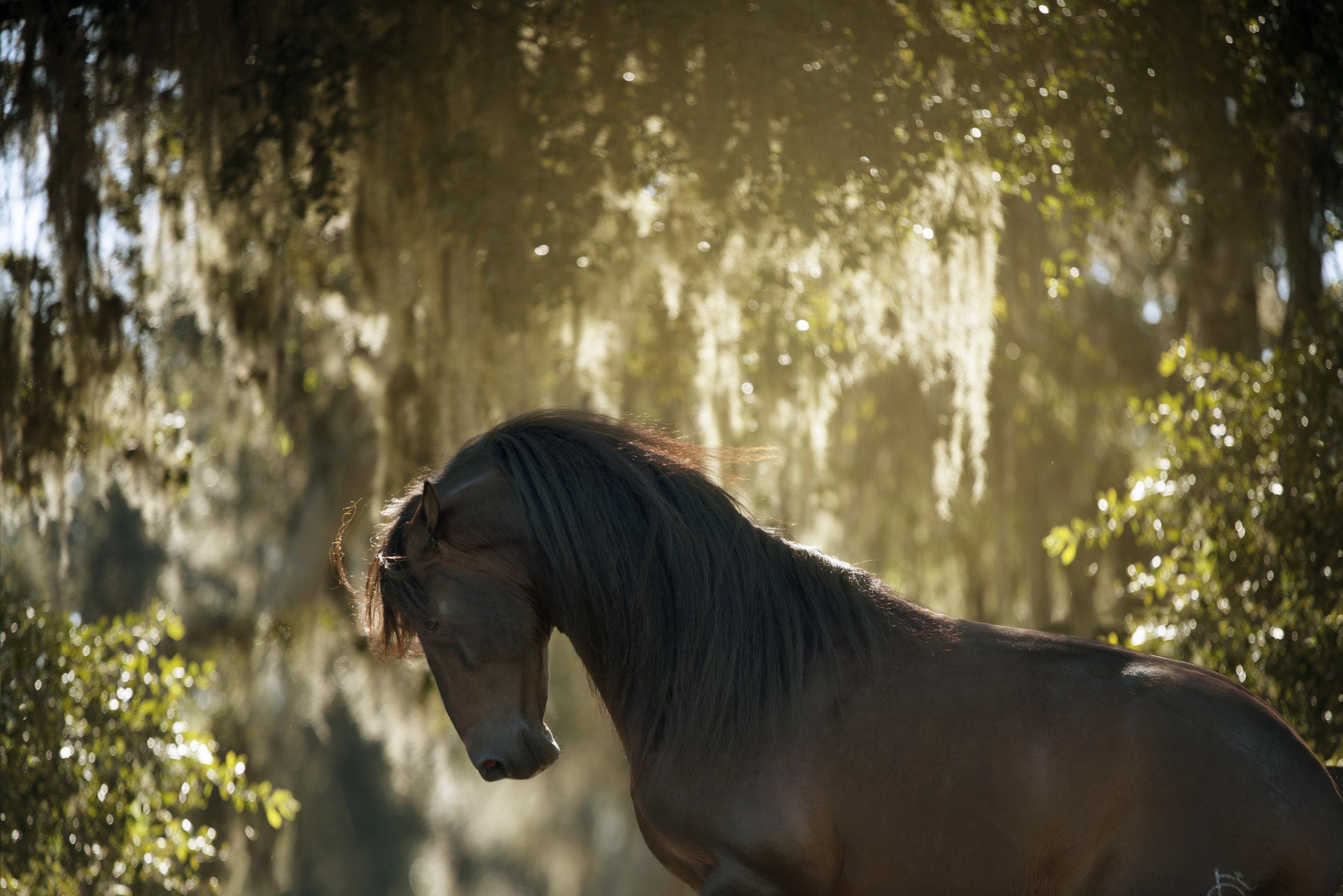 Contact Equestrian Photographer.jpg