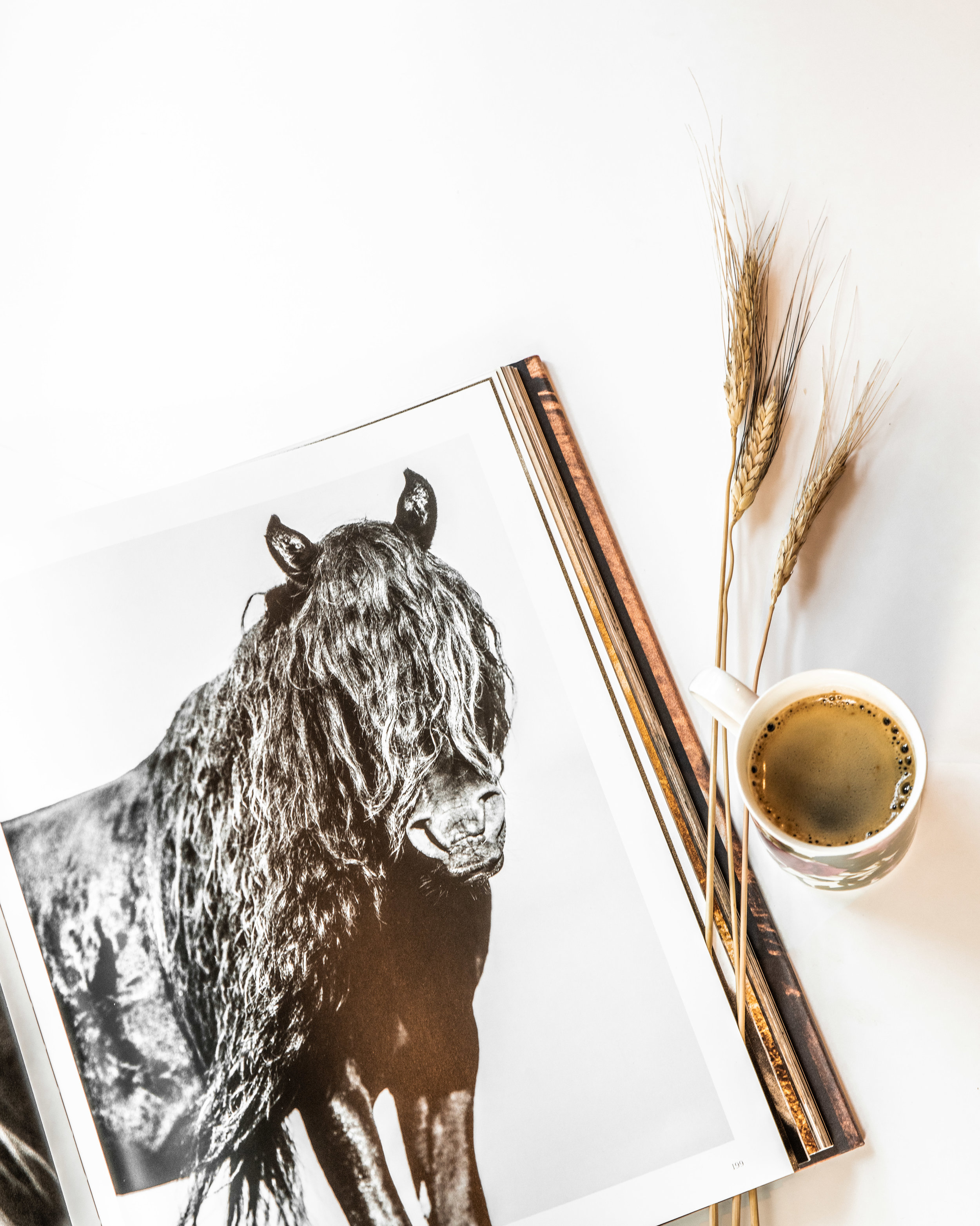 Coffee and horses