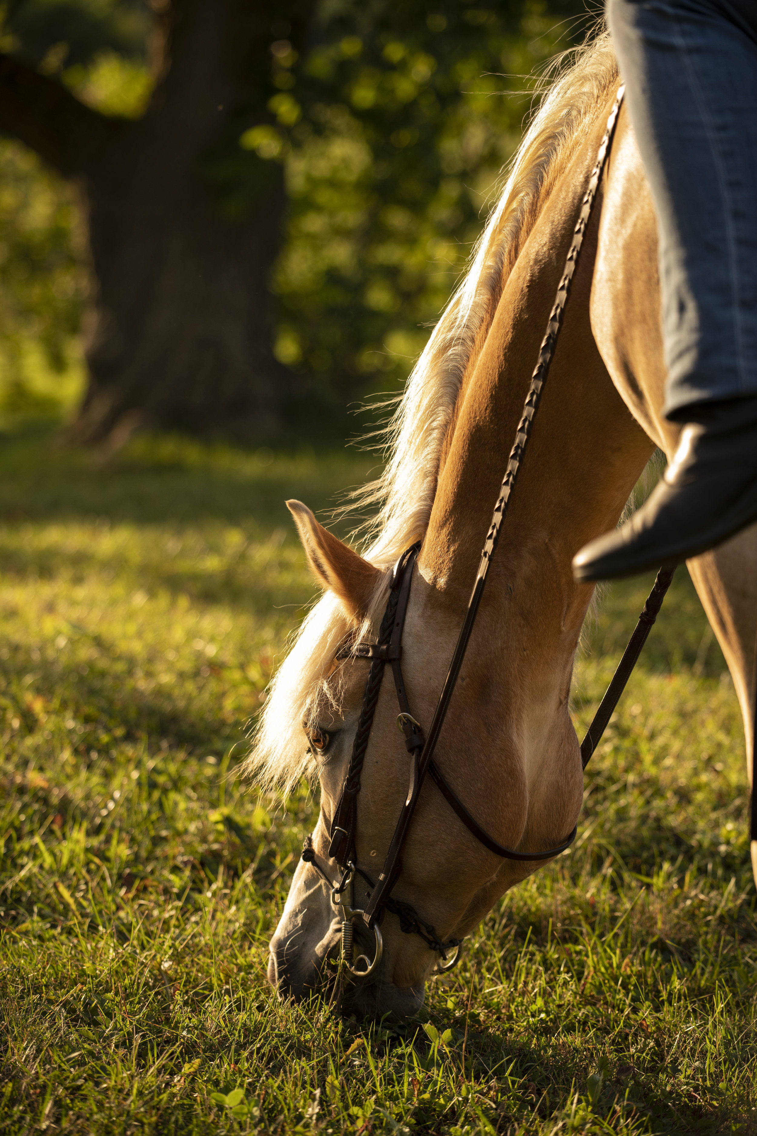 Teach your horse to not eat grass unless you let them!