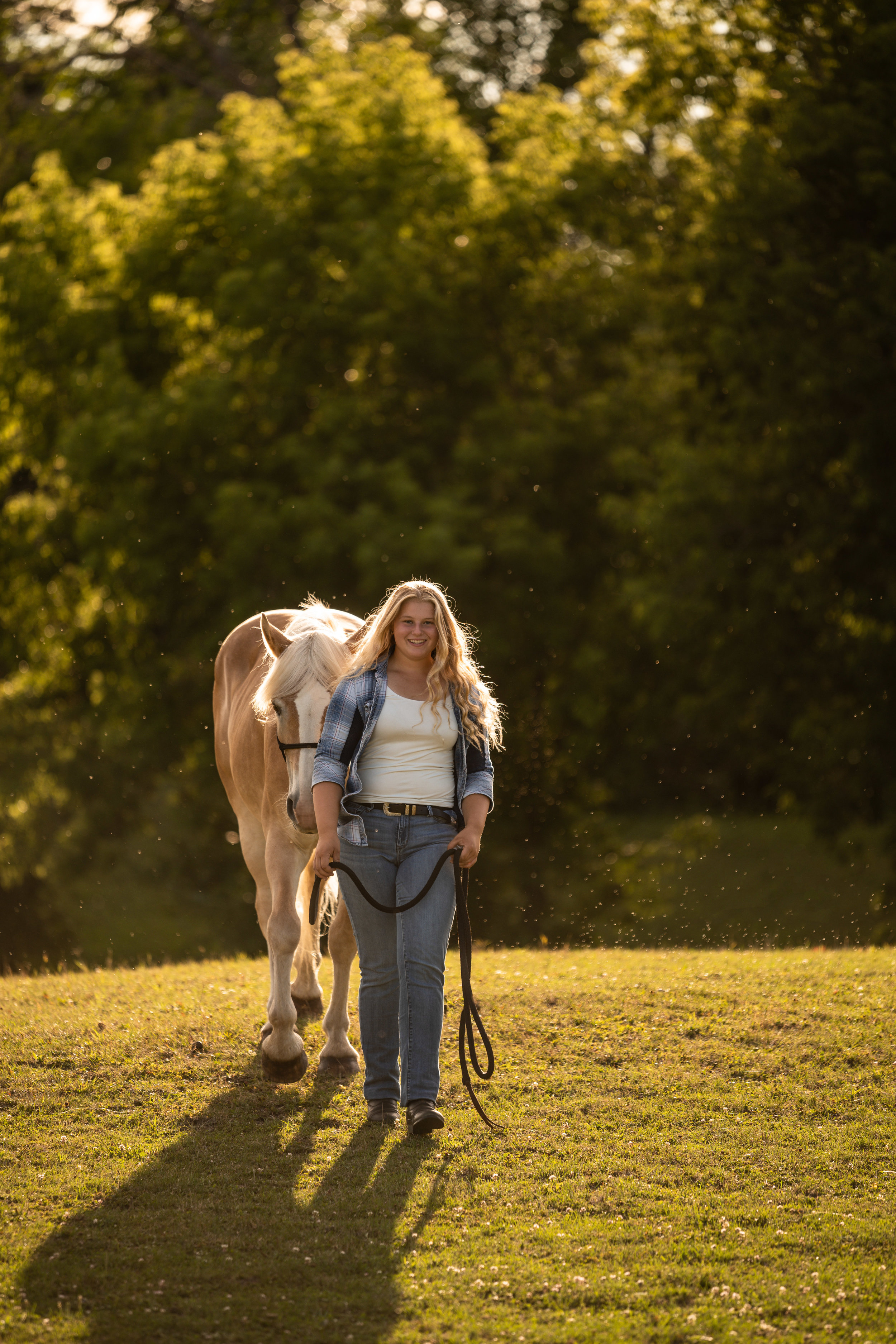 Girl with Haflinger mare