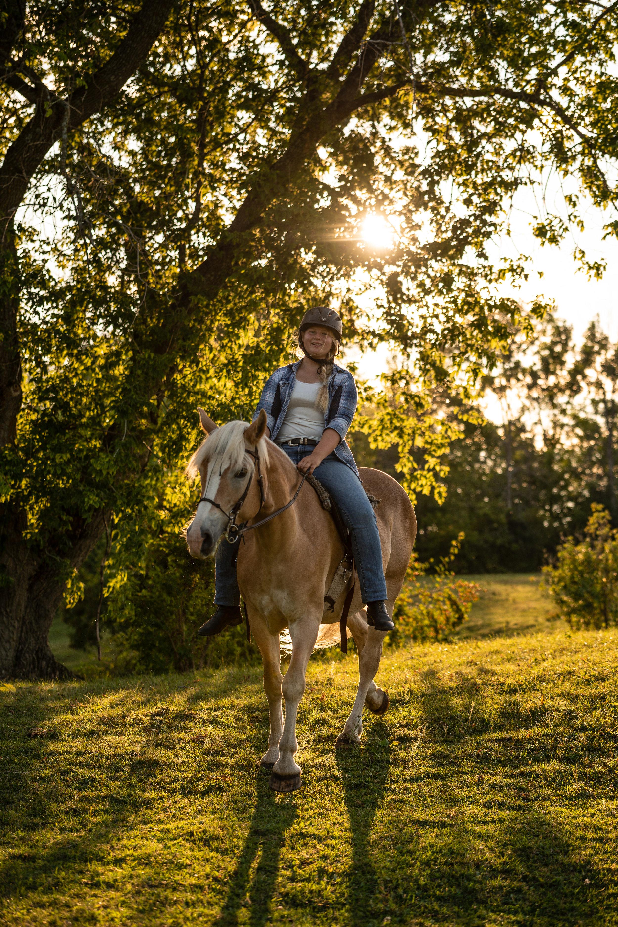 Girl riding Haflinger at sunset