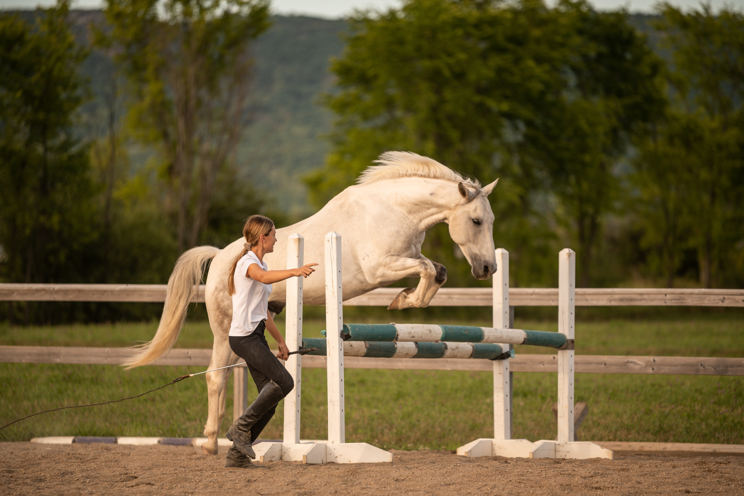 Pretty white horse jumping at liberty