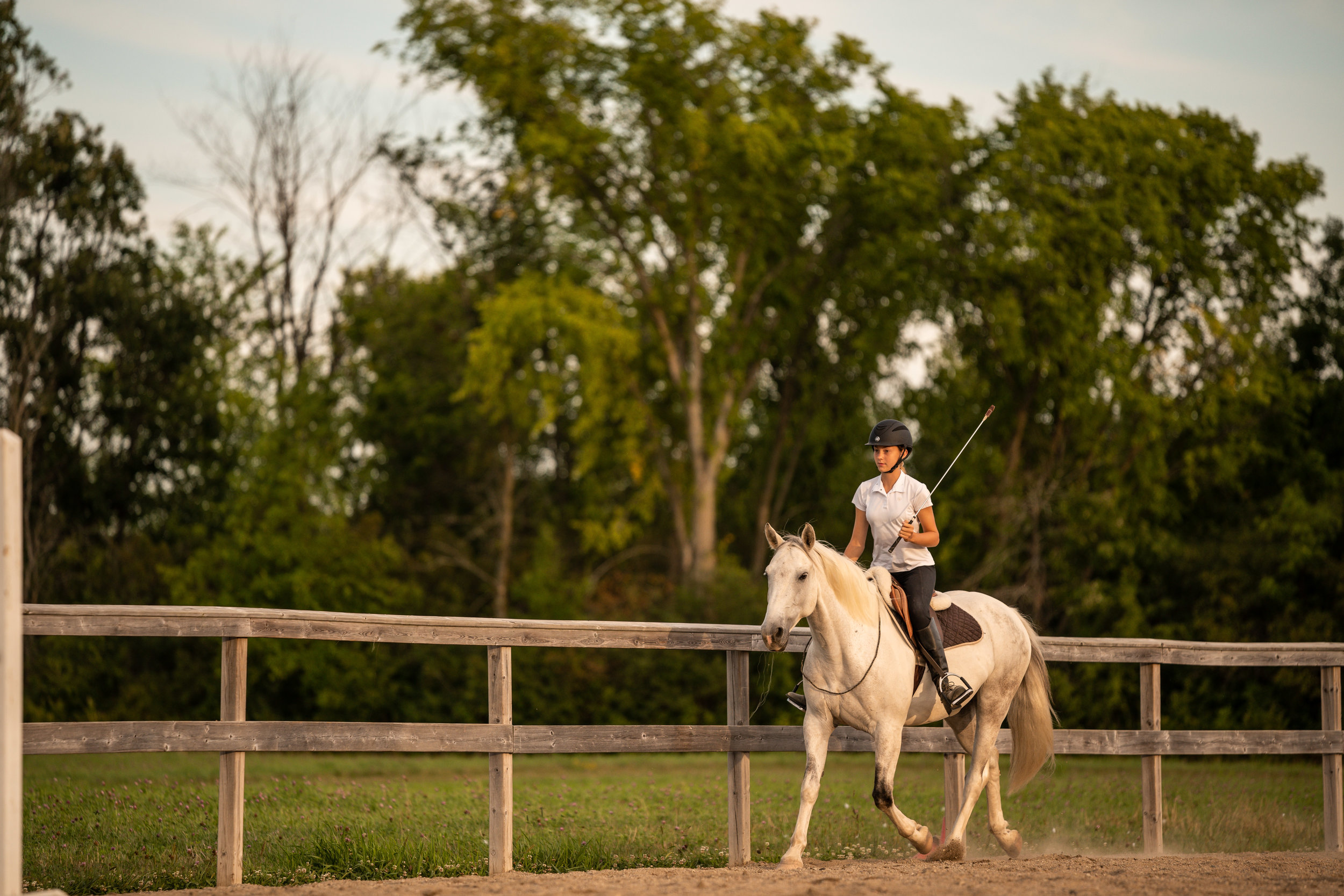 Pretty white horse and bridleless riding