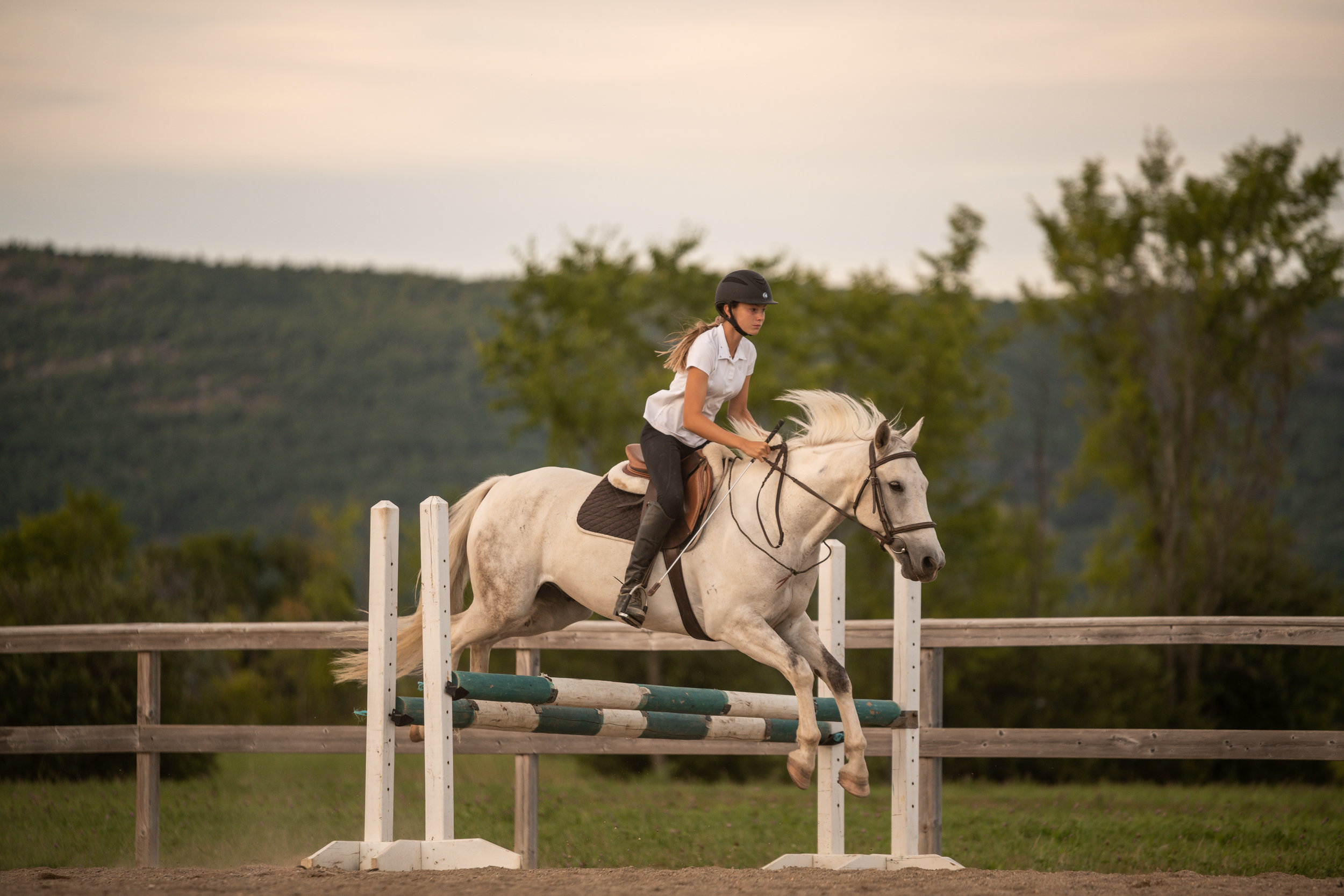 Pretty white horse and bridleless jumping