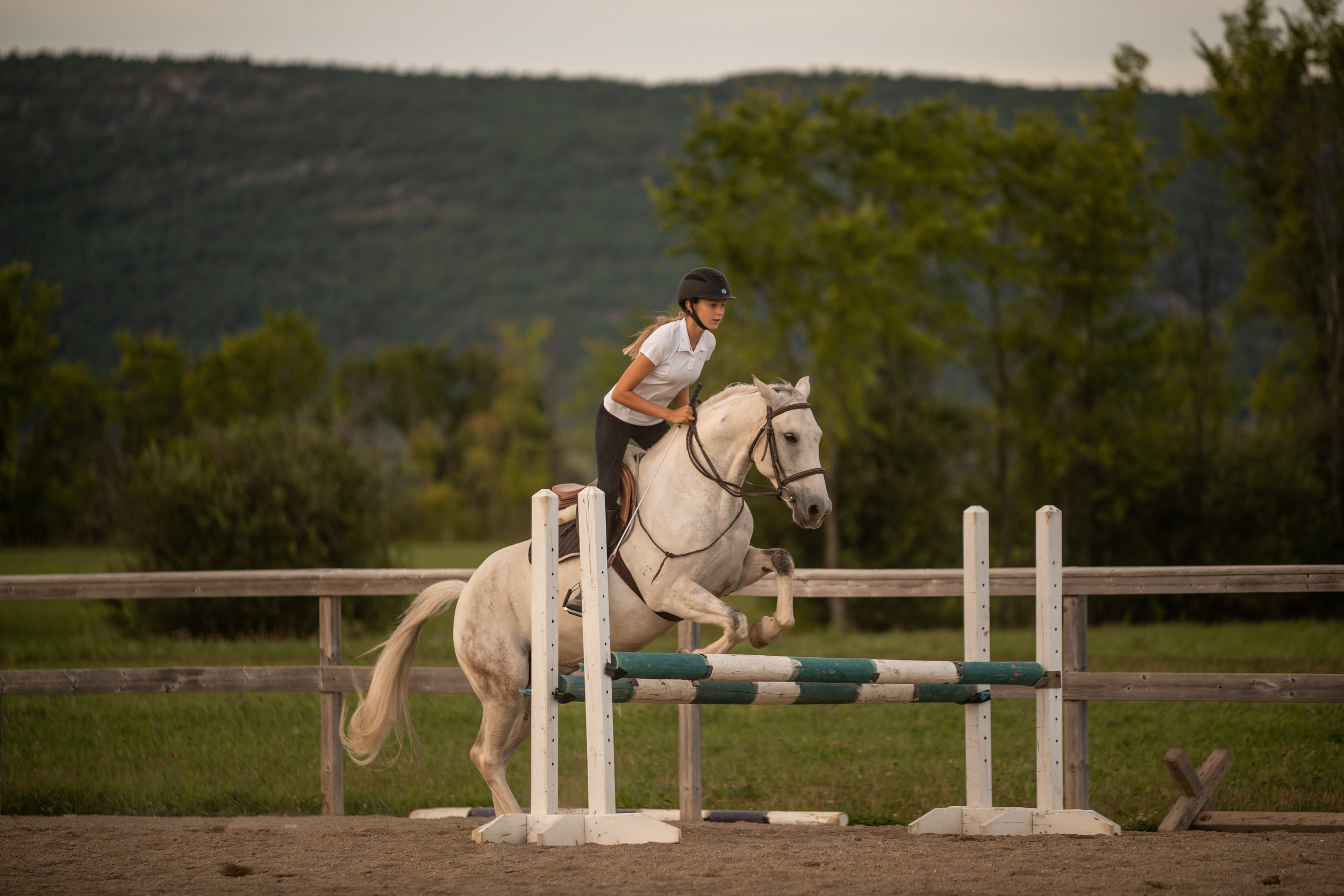Pretty white horse and jumping