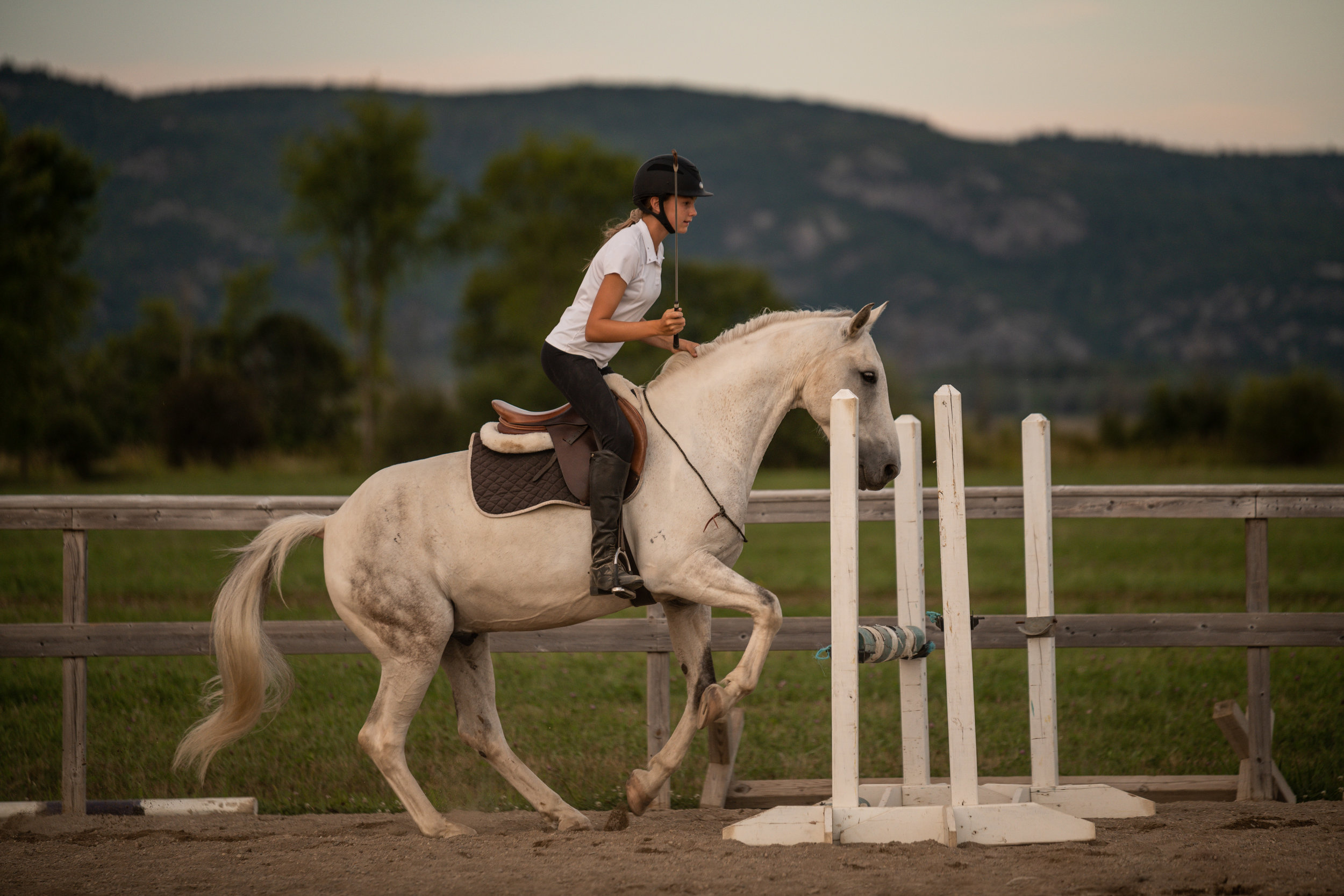 Pretty white horse jumping bridleless