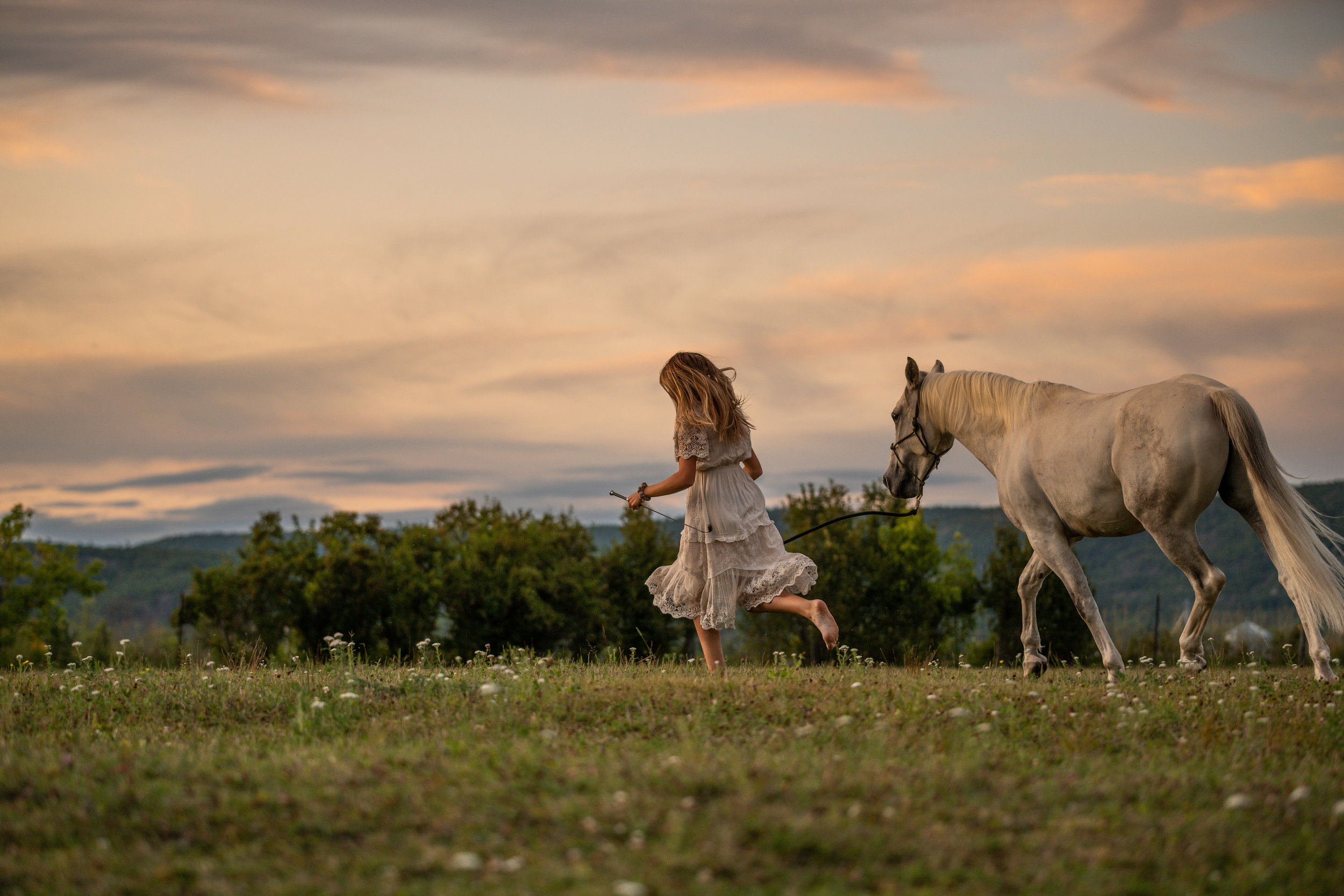 Pretty white horse and owner running through the fields at sunset