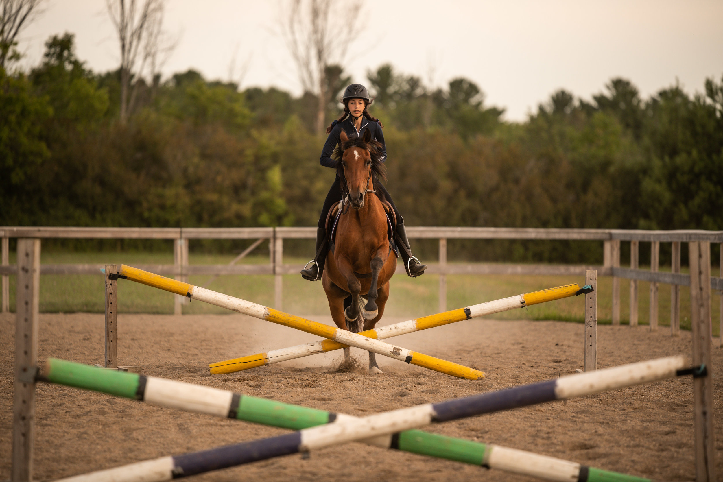 bay mare jumping