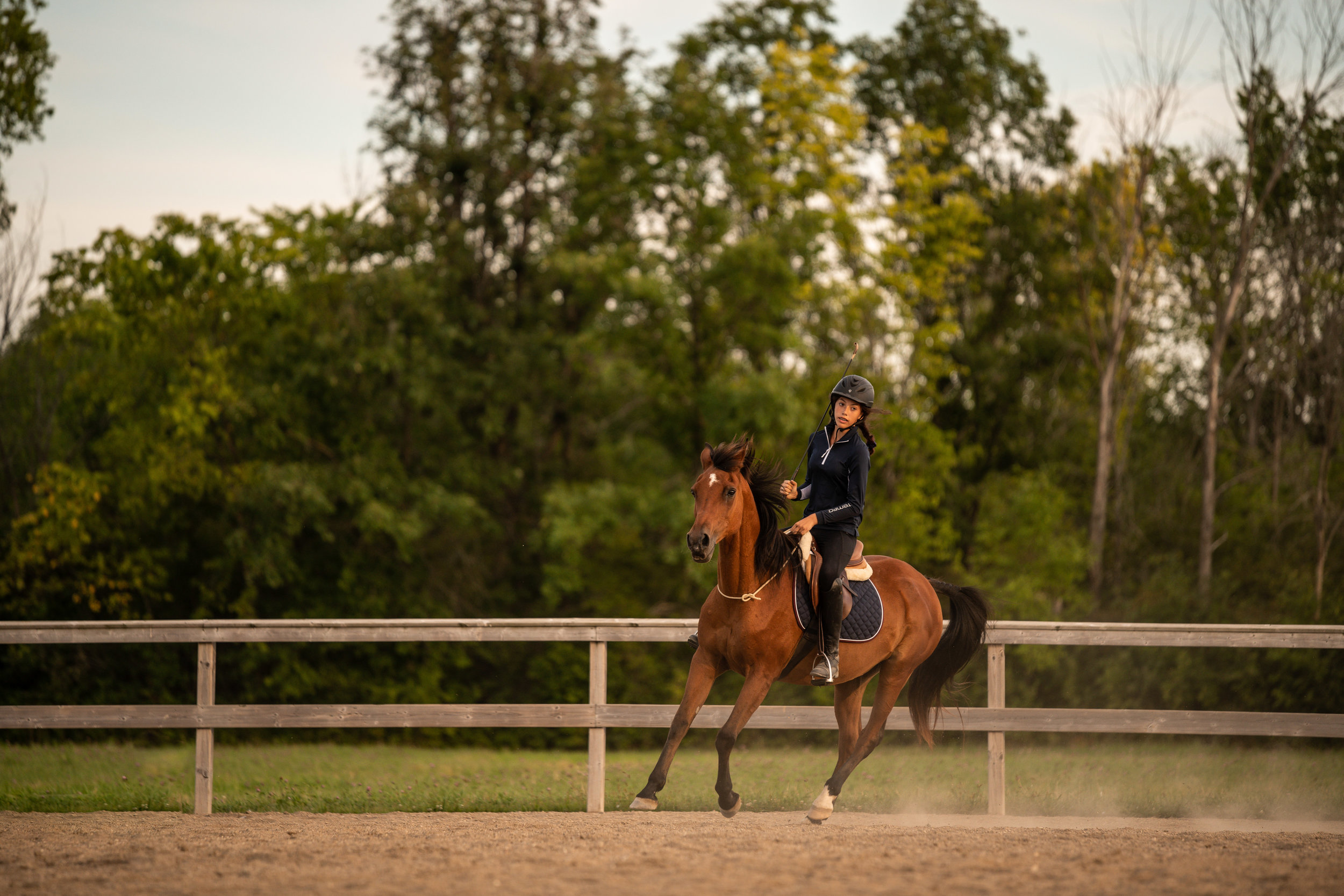 Bay mare bridleless riding
