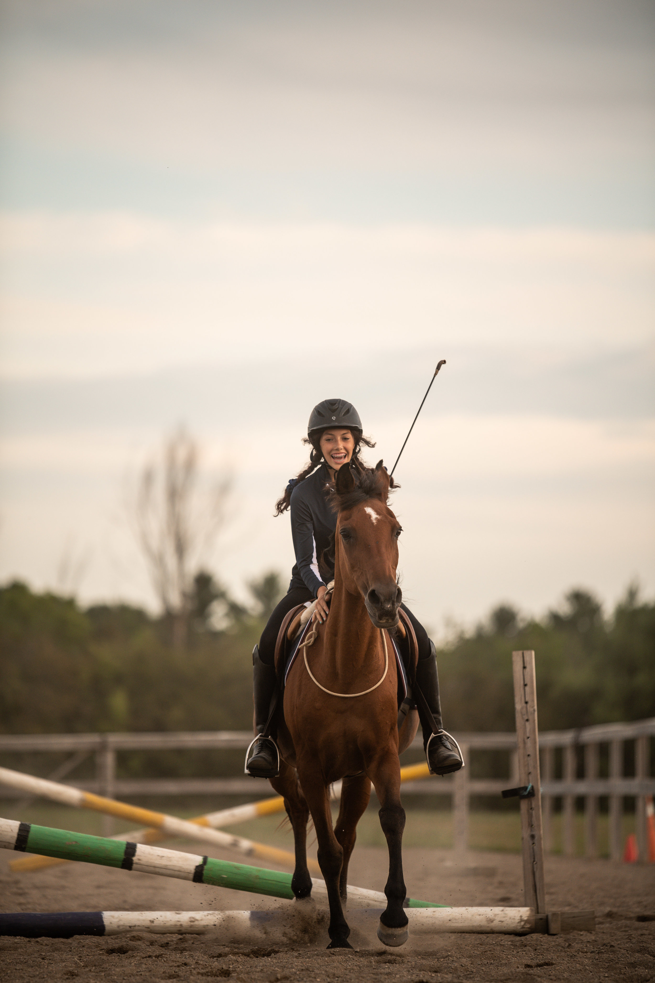 Bay mare bridleless riding and jumping