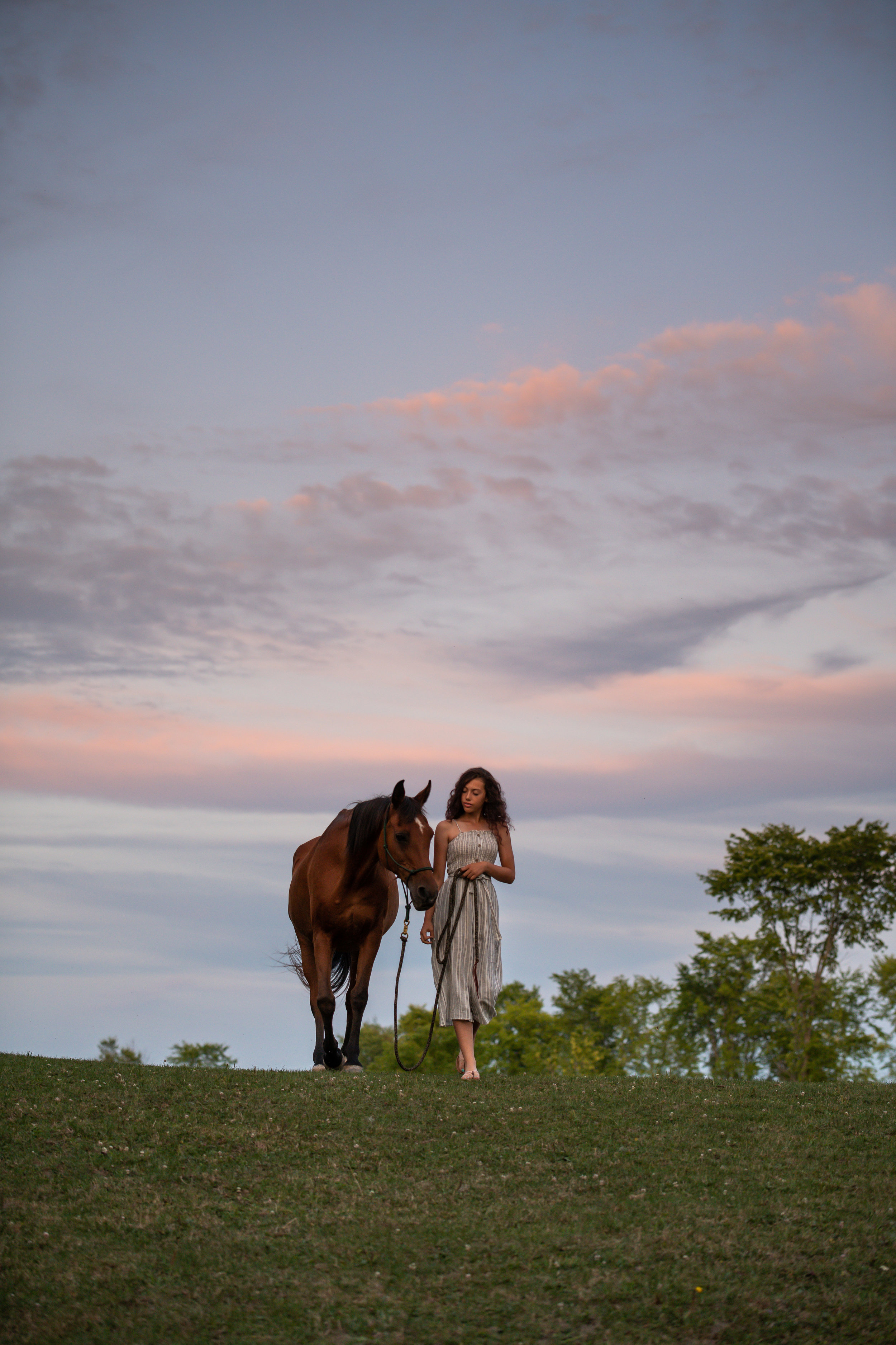 Bay mare lifestyle equestrian photography at sunset