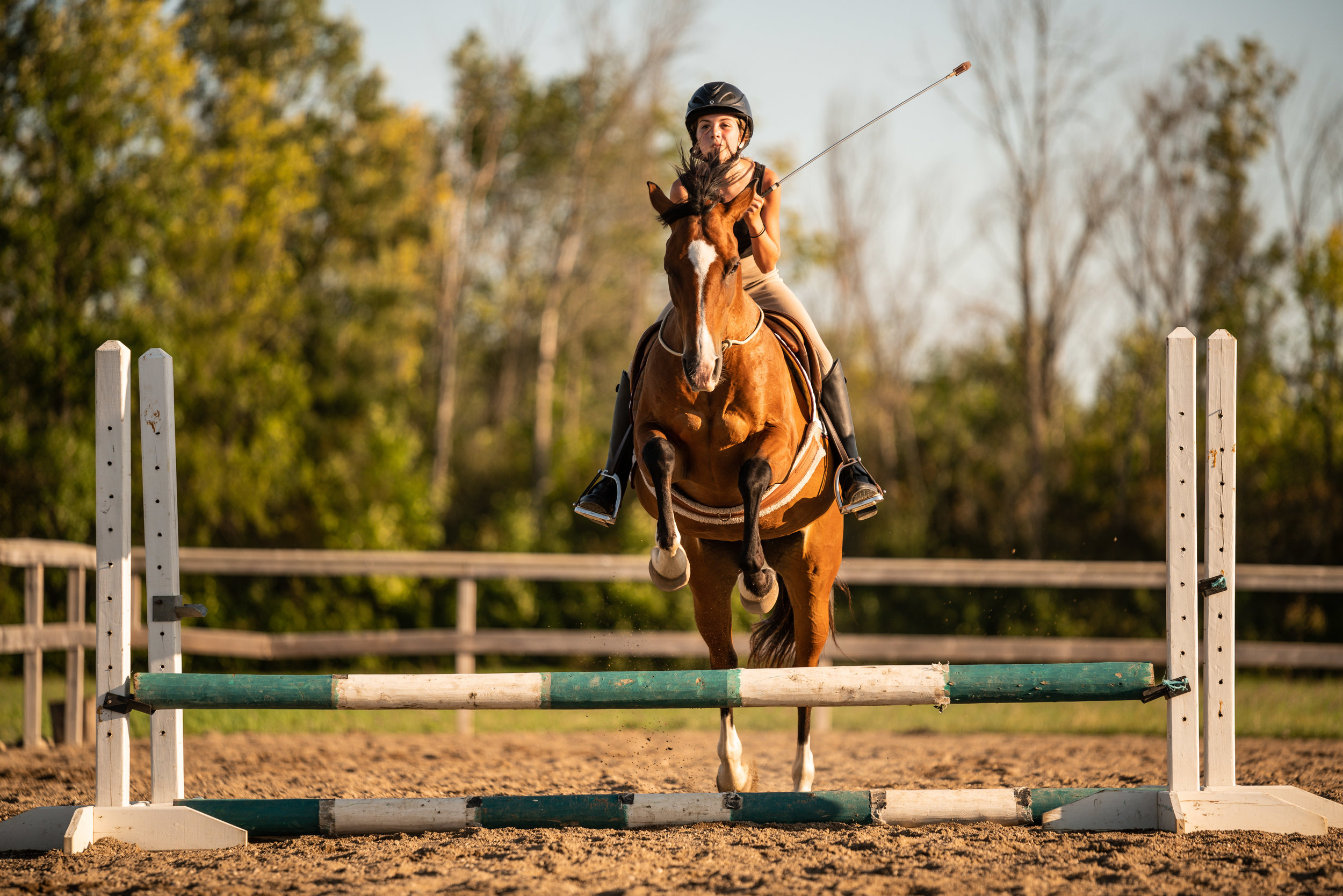 Bay mare bridleless jumping
