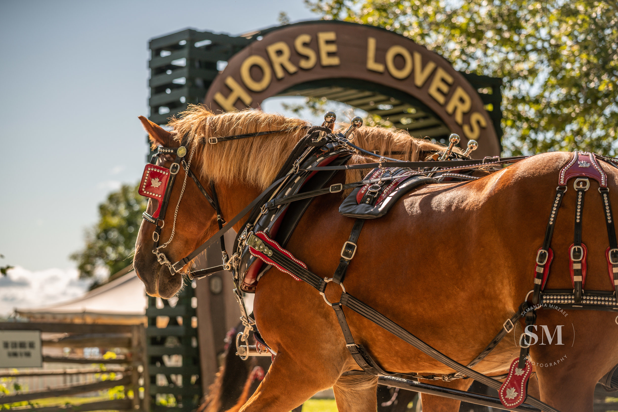 Two horses pull a cart at Upper Canada Village during Horse Lovers Weekend 2019