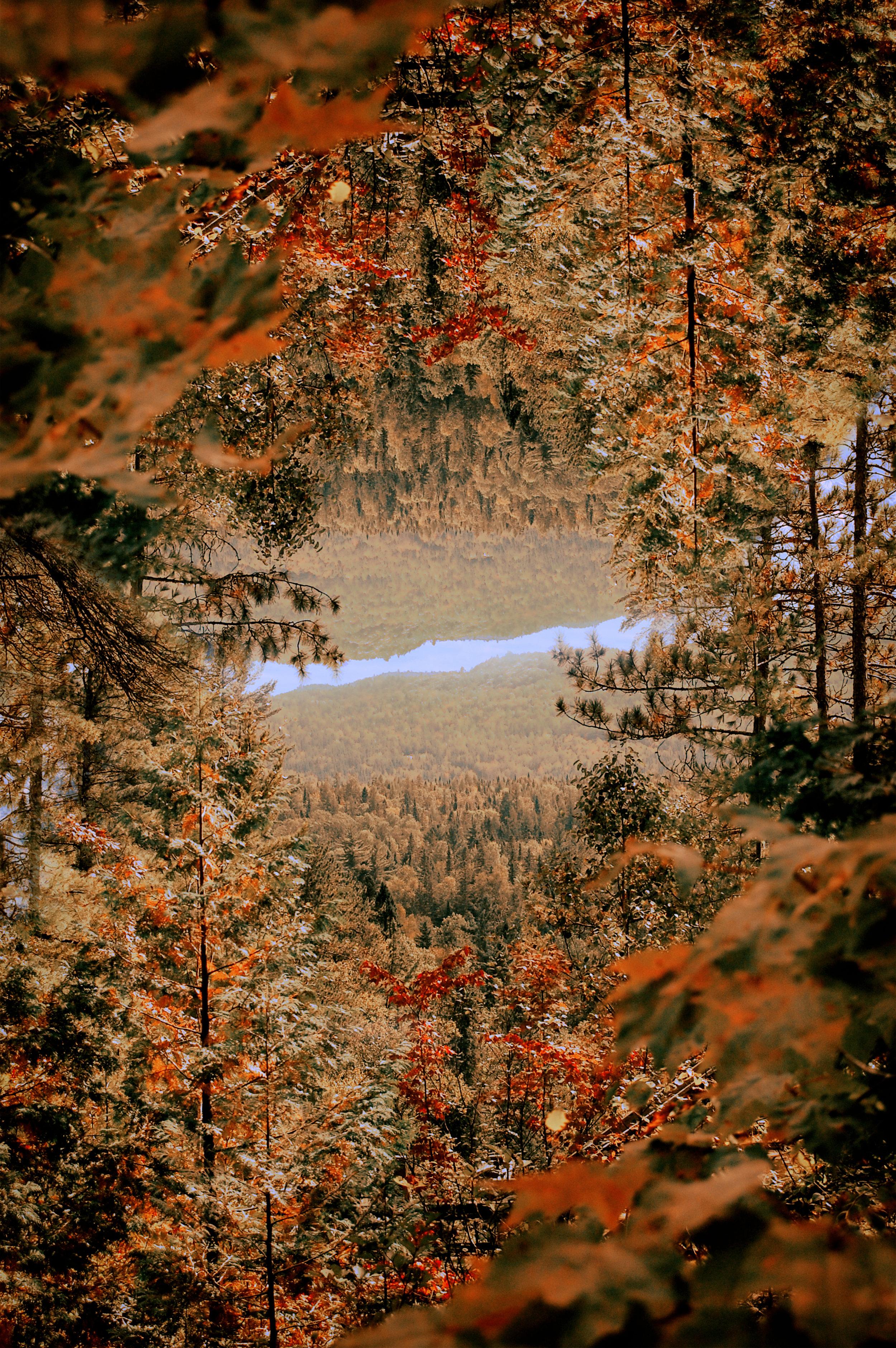 o nature.jpg