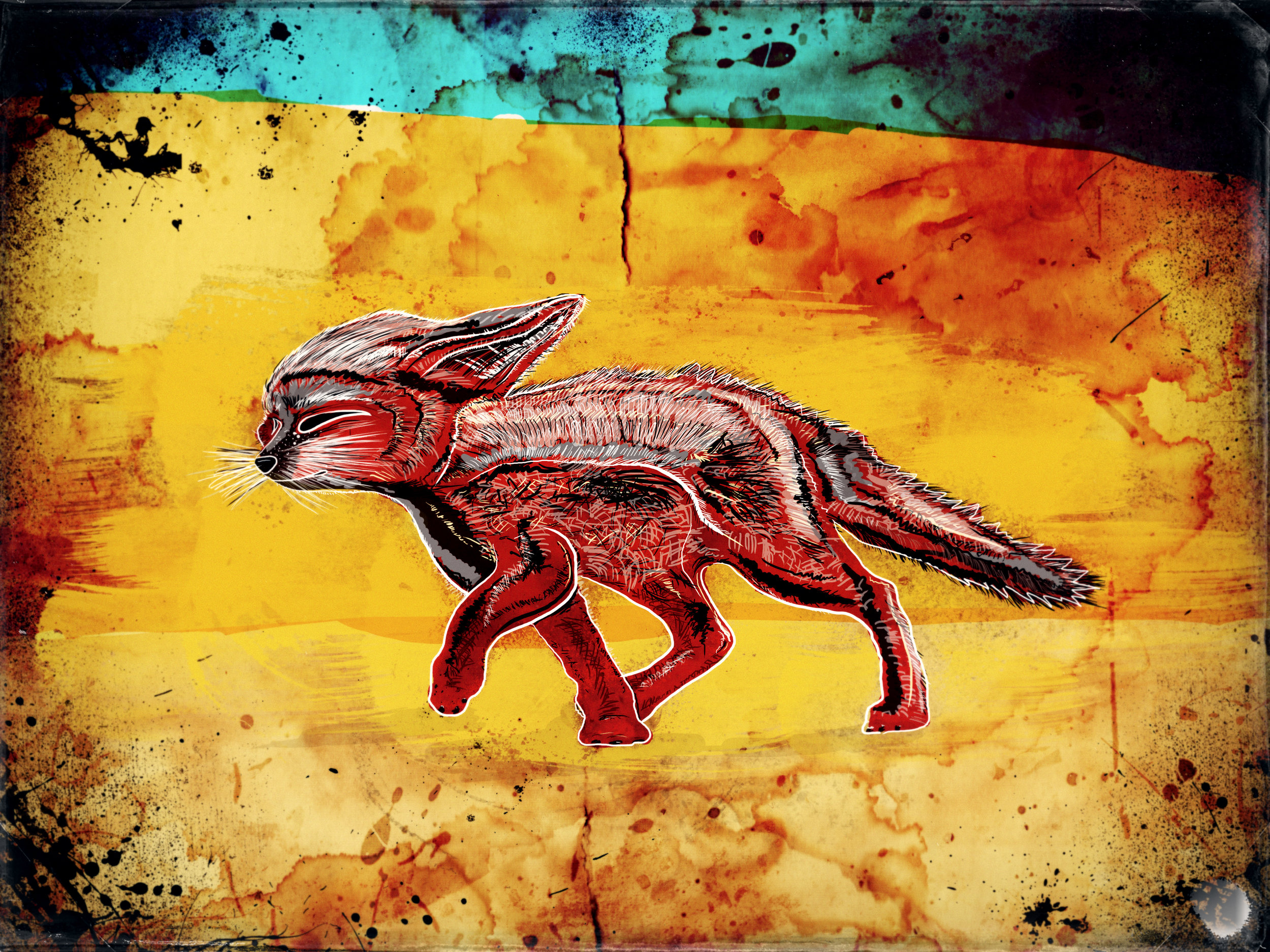 Fennec fox.jpg