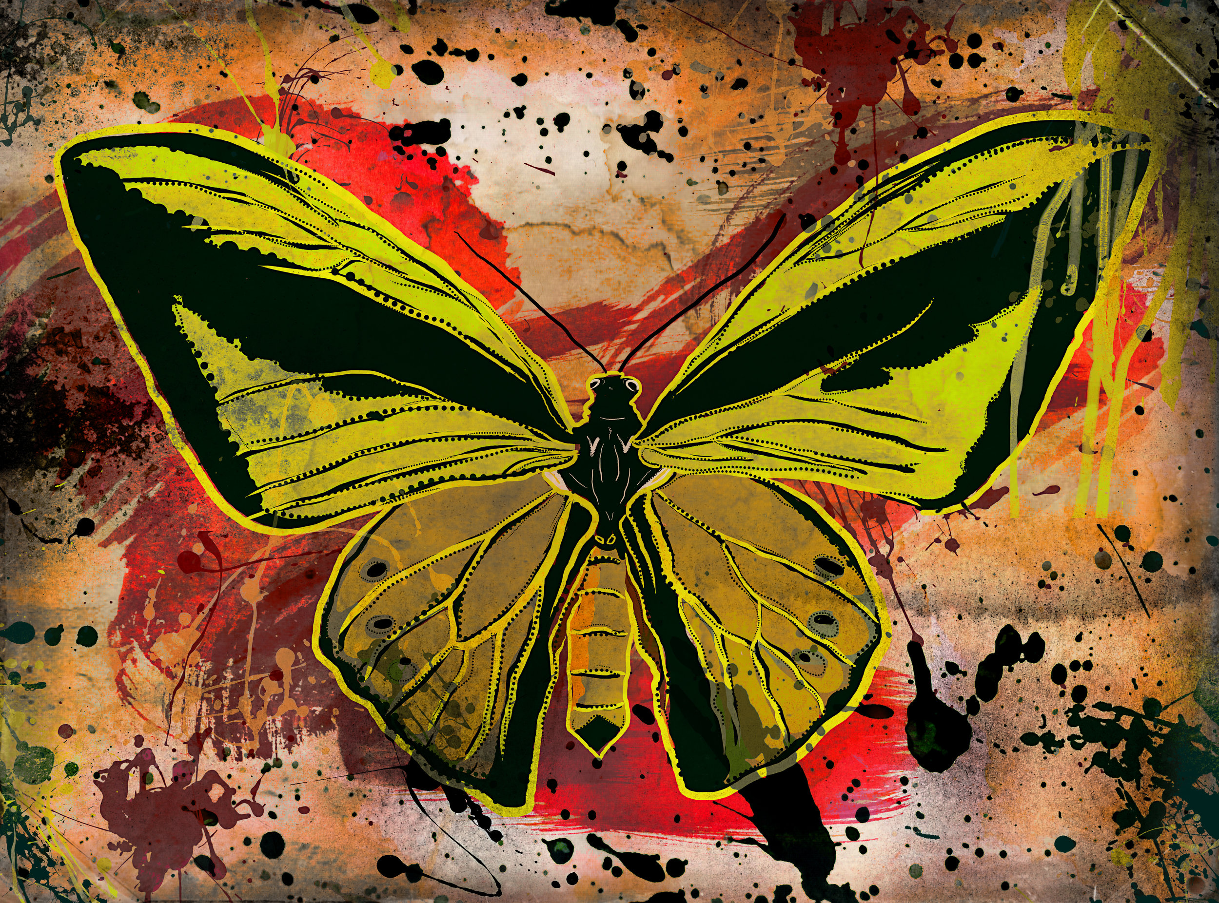 Green yellow butterfly.jpg