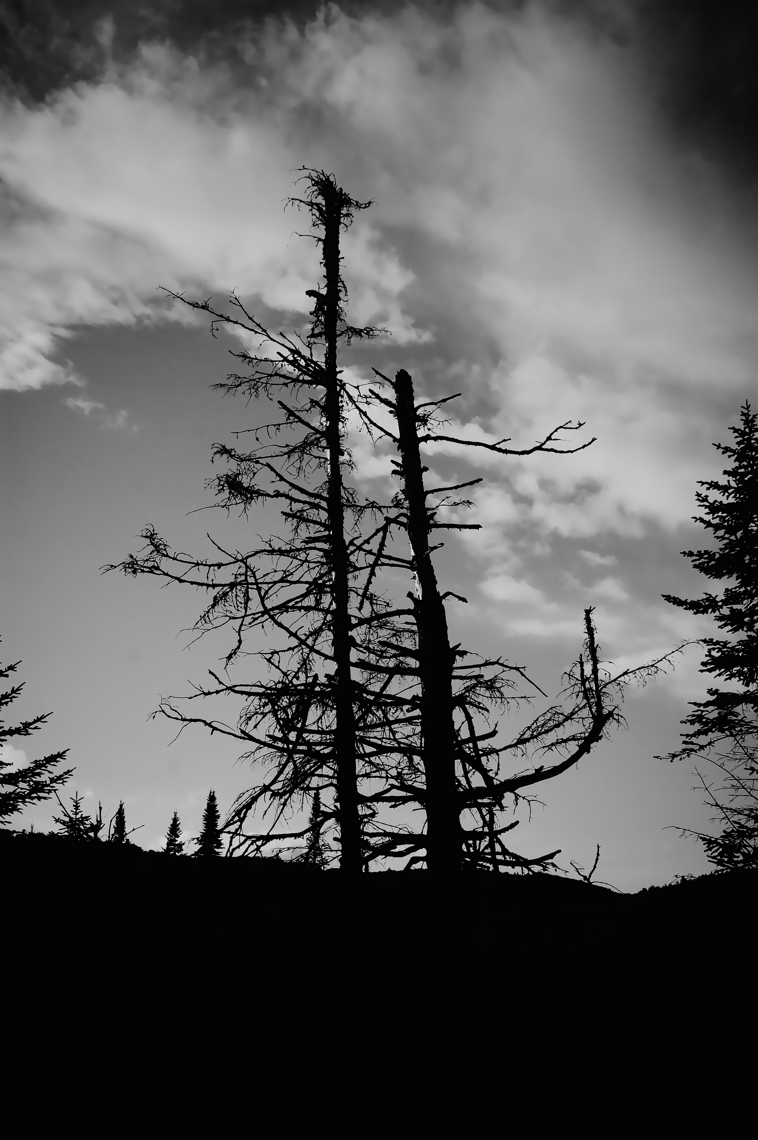 treezz.jpg