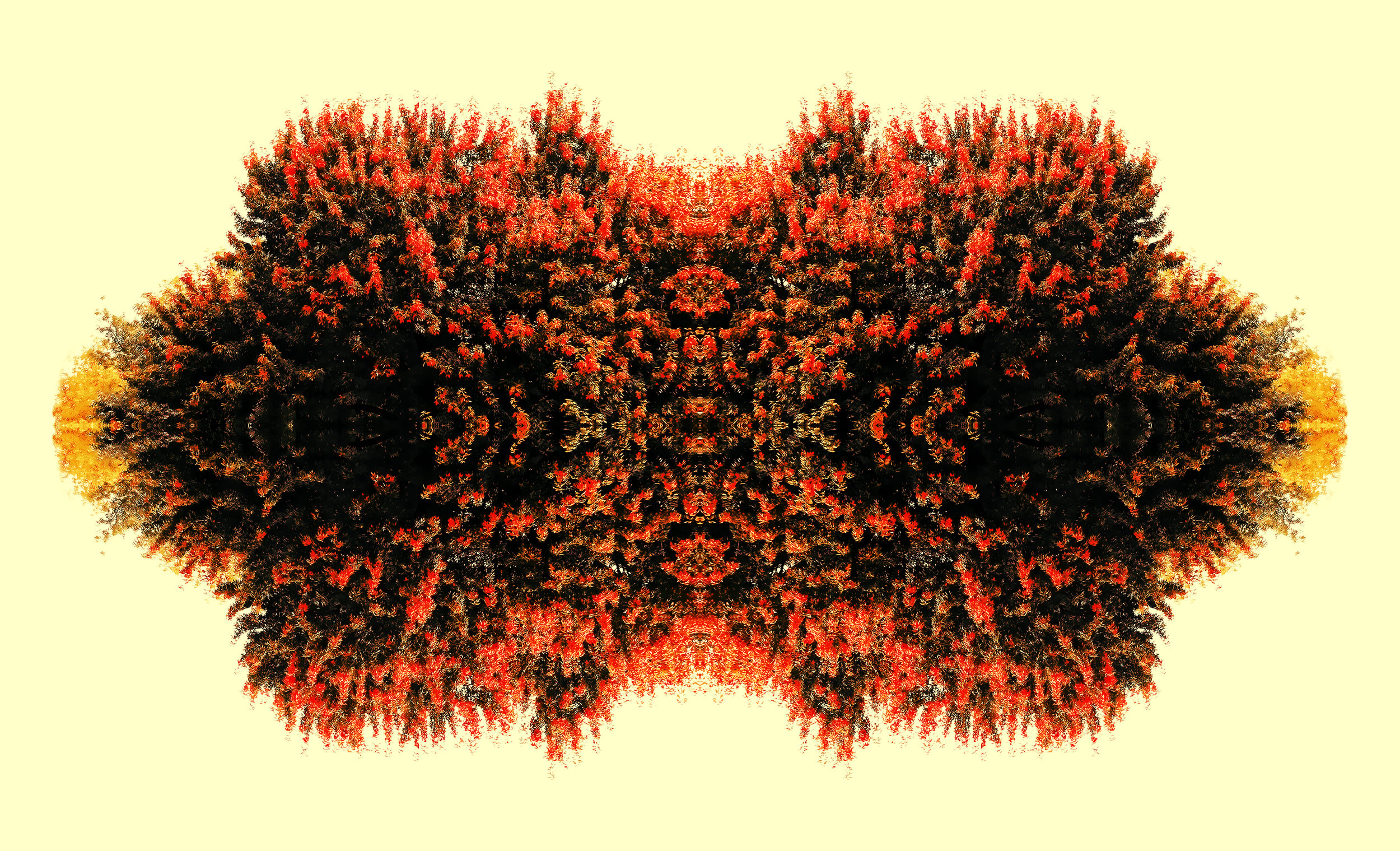 the bllome1.jpg