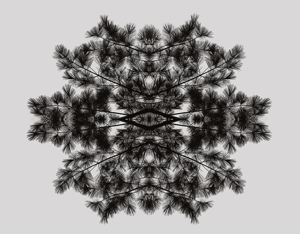 TREE-RISING.jpg