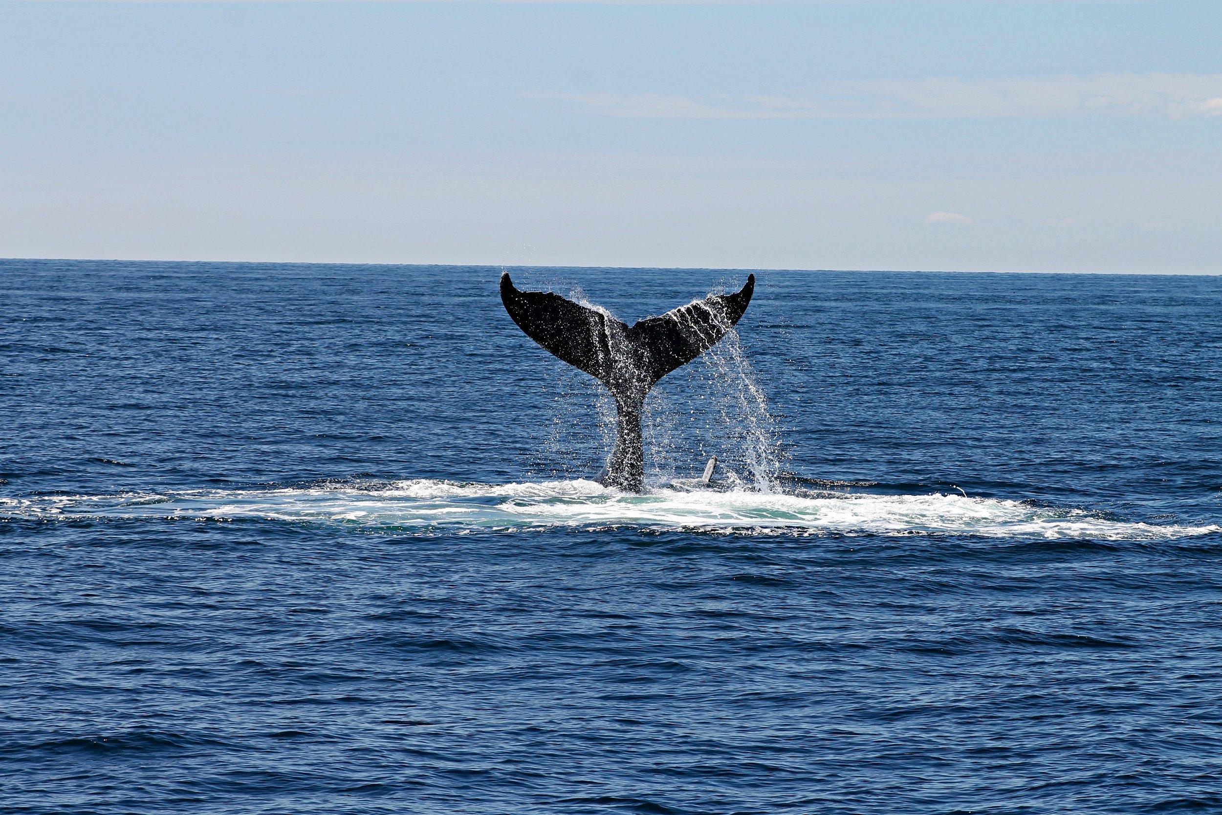 animal-daytime-deep-ocean-892548.jpg
