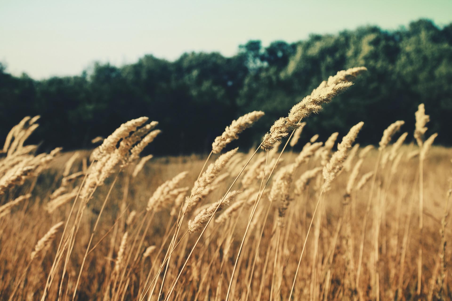 summerfield-336687_1920.jpg