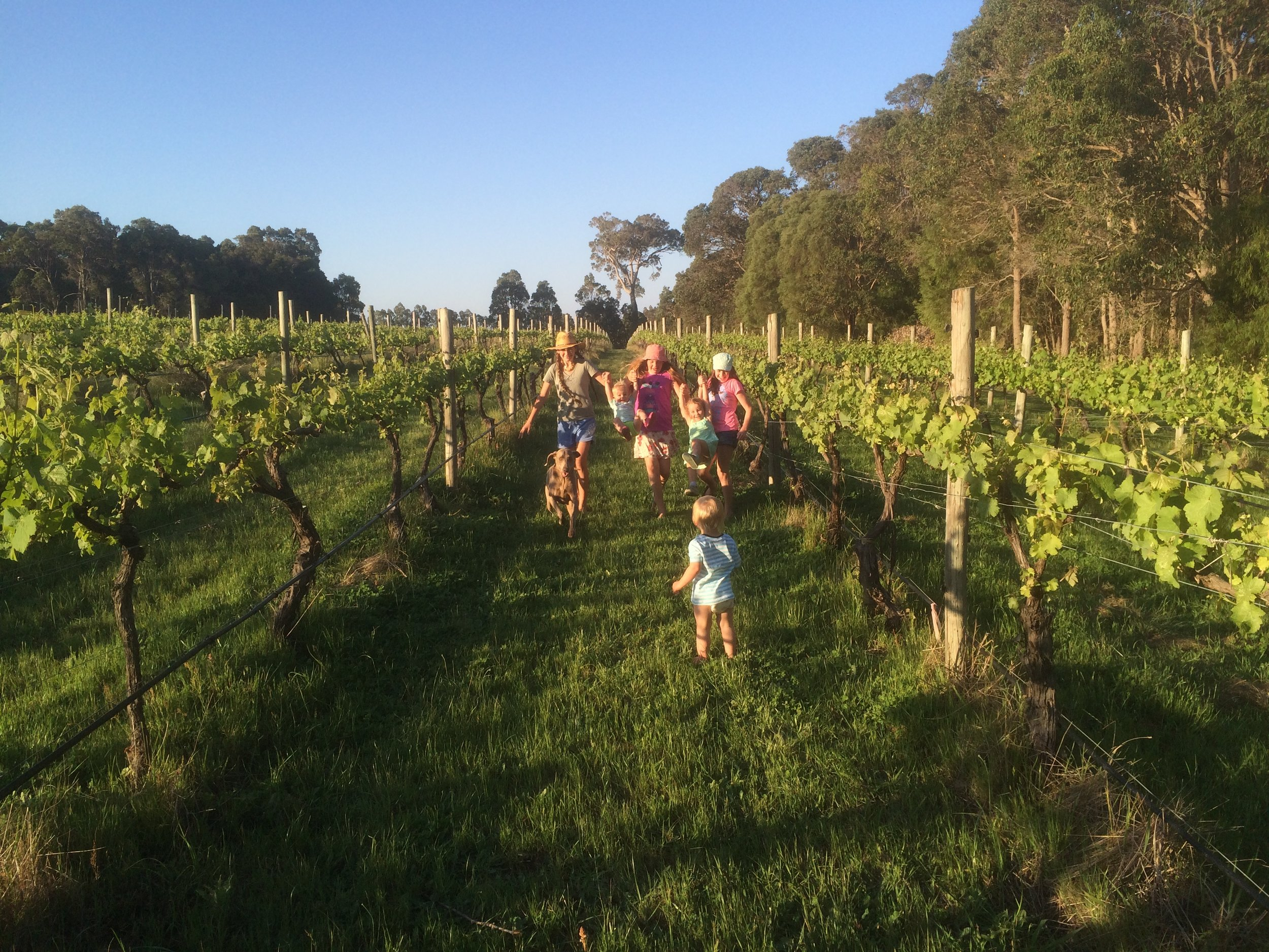 Kids in vineyard full.JPG