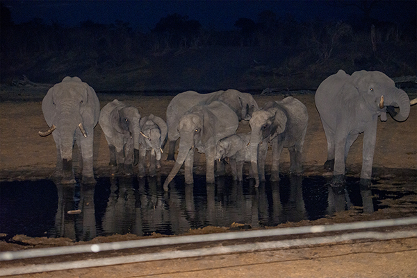 An Elephants watering hole. While we were watching them, a Honey Badger checked us out. I kid you not.