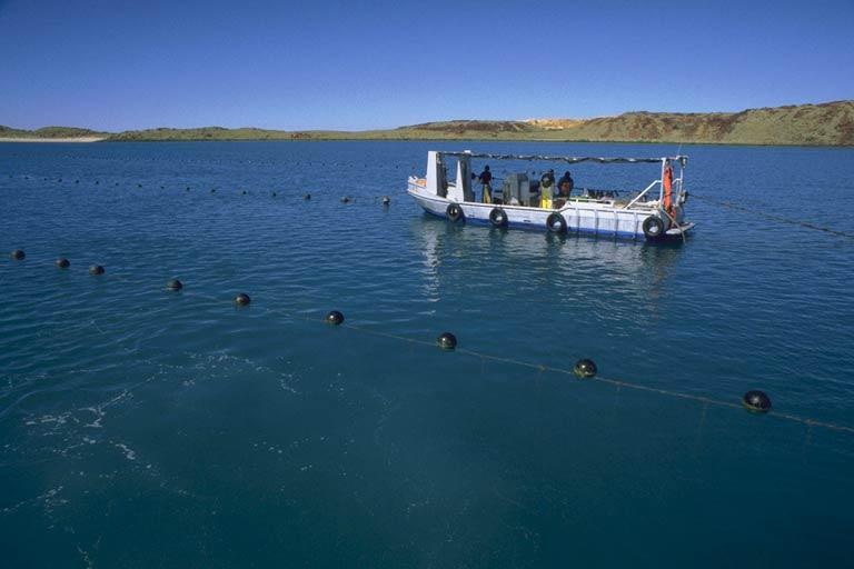 Dampierboat1.jpg