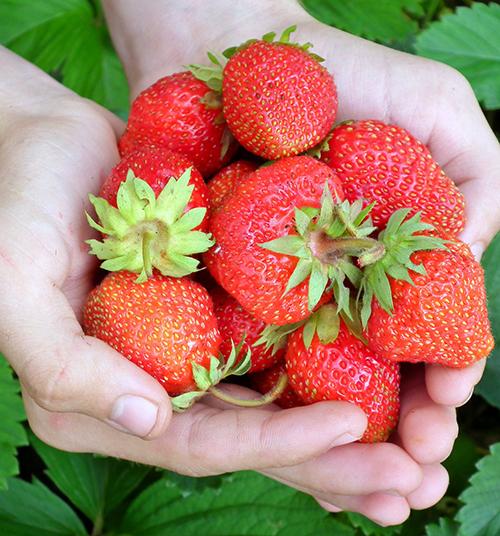 cara-crye-ceo-farm-supply-company-pixabay-197078.jpg