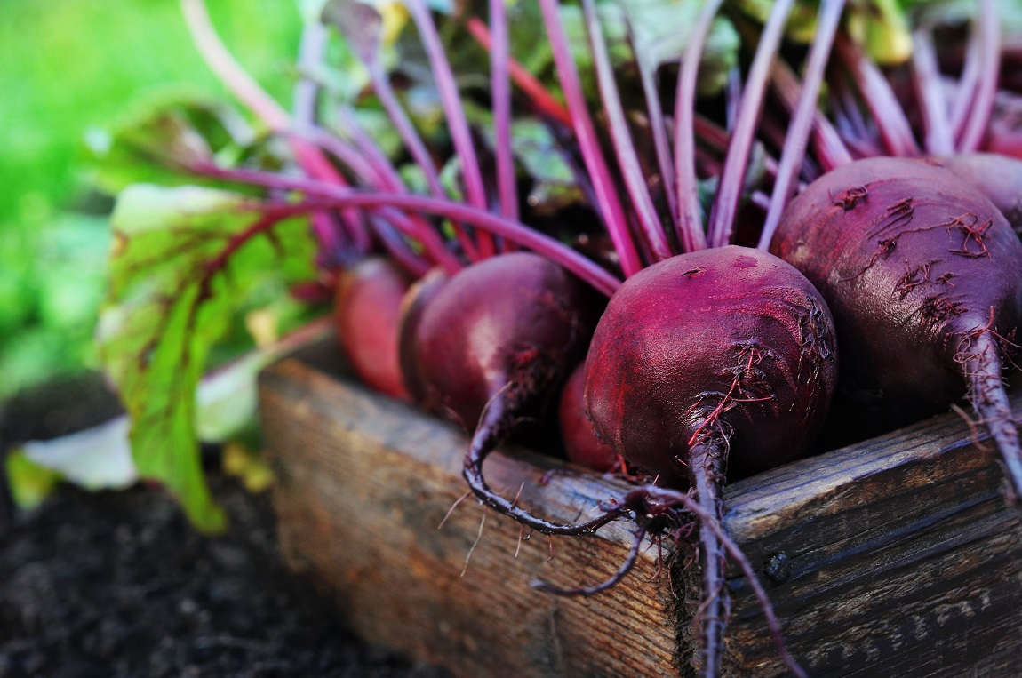 beetroot picture small.jpg
