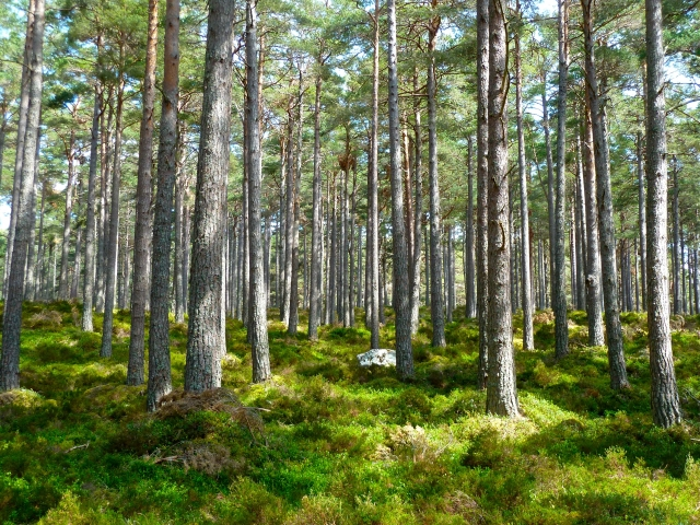 forest 272595.jpg