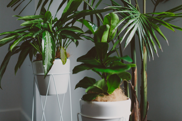 The-Windsor-Workshop-Greenery-Plants.jpg