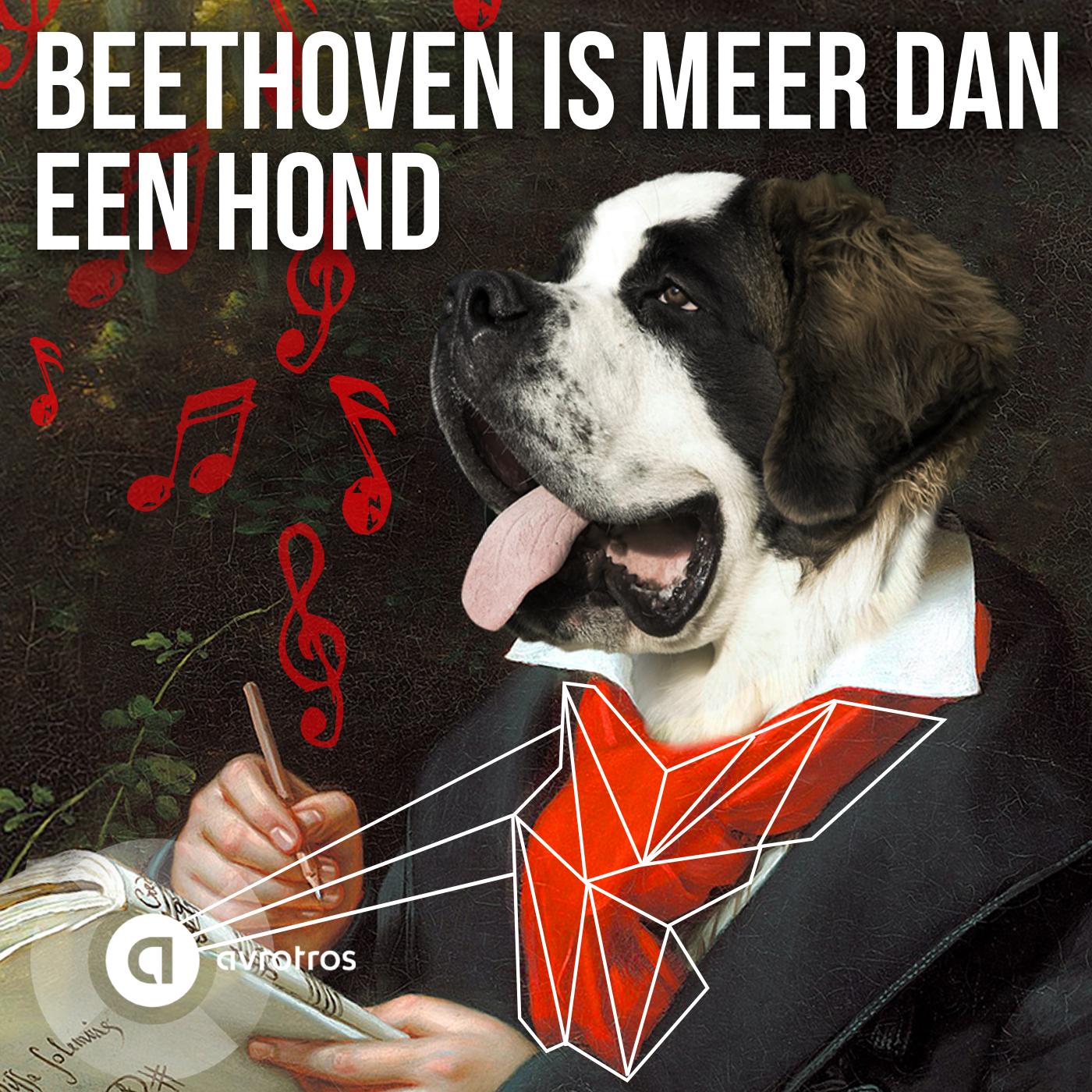 13. Beethoven Is Meer Dan Een Hond - AVROTROS
