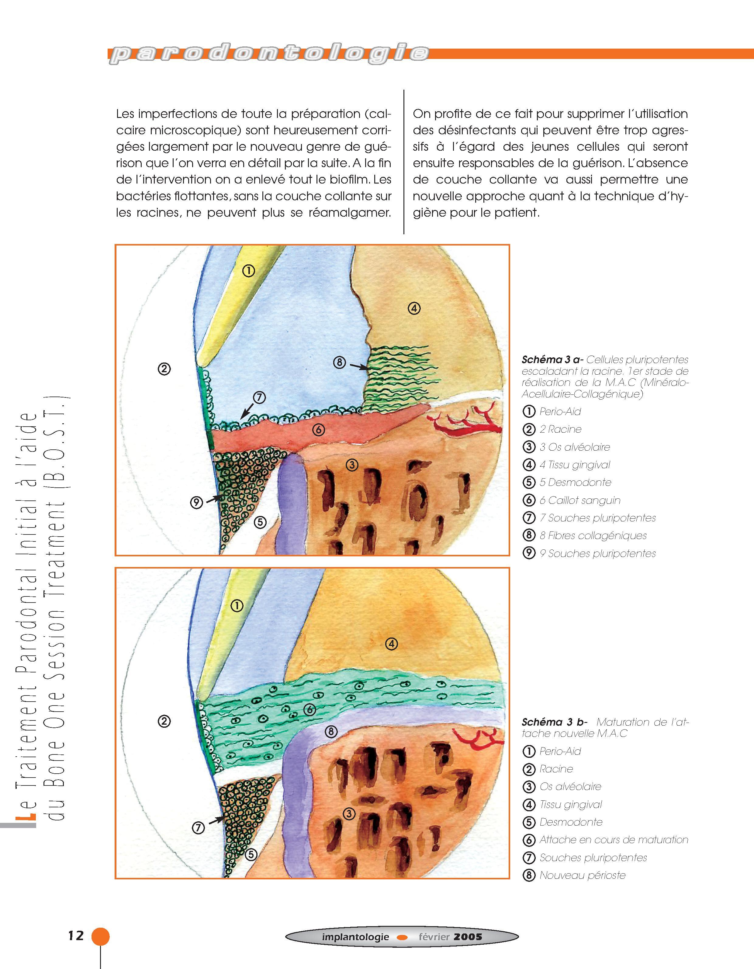 Implantologie BOST Article 14 BLZ-6.jpg