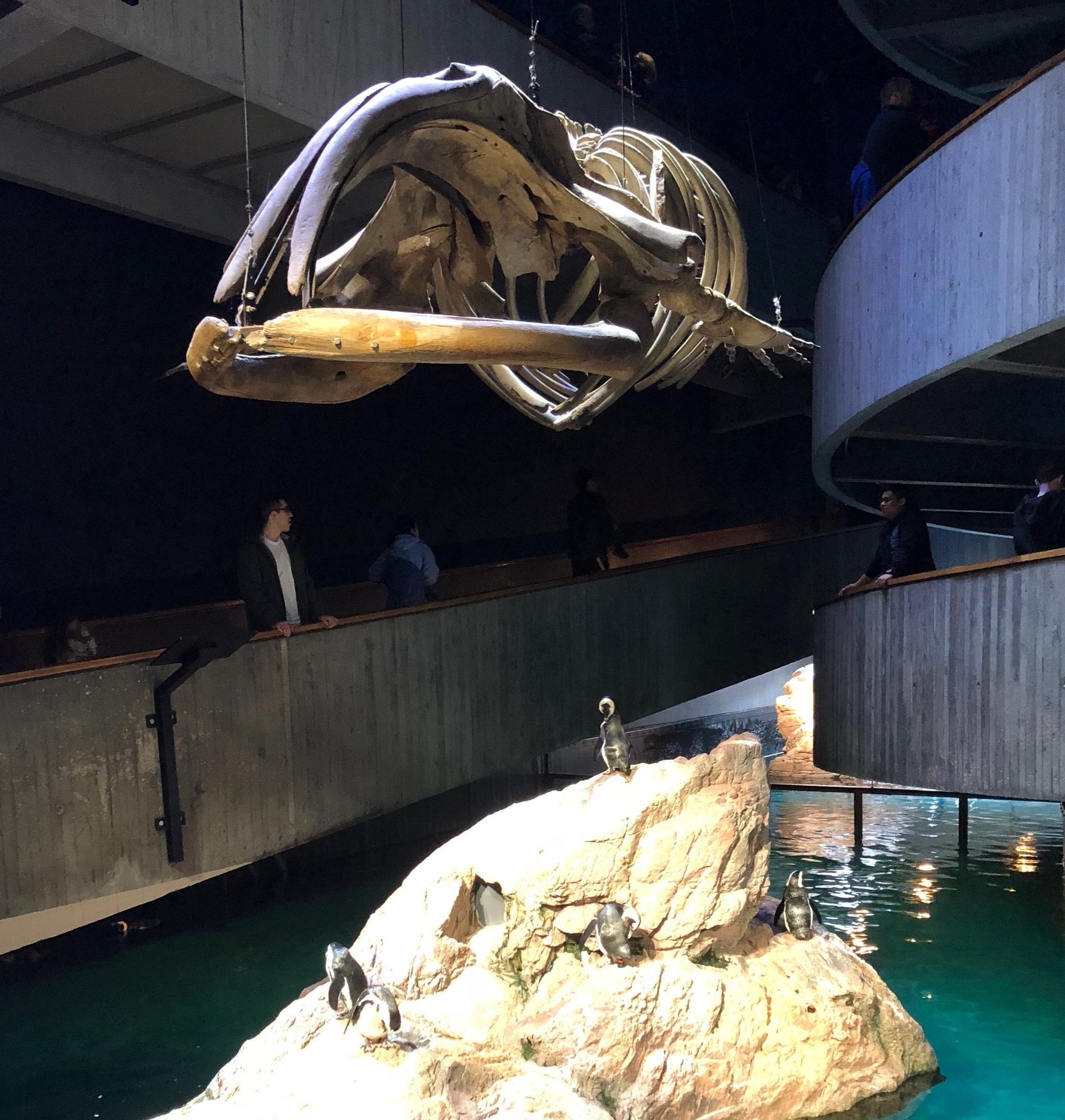 HIST1708 visit to the New England Aquarium