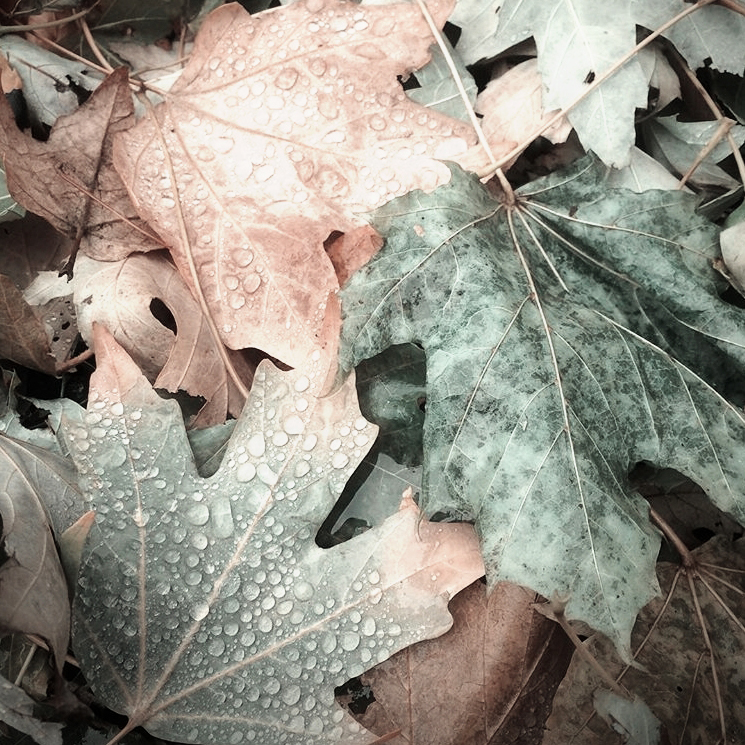 leaves FX HC.jpg