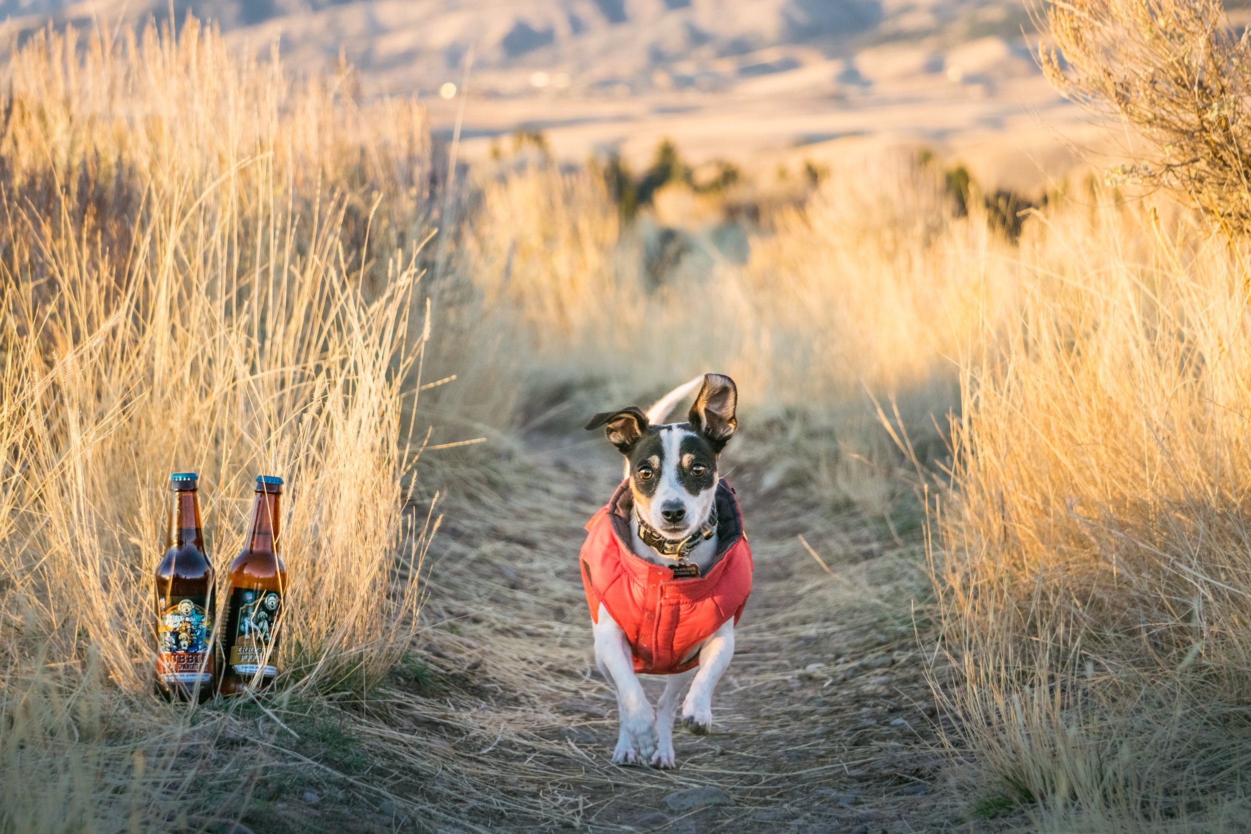 happy dog beer creates healthy drinks for your dog's active and adventurous lifestyle