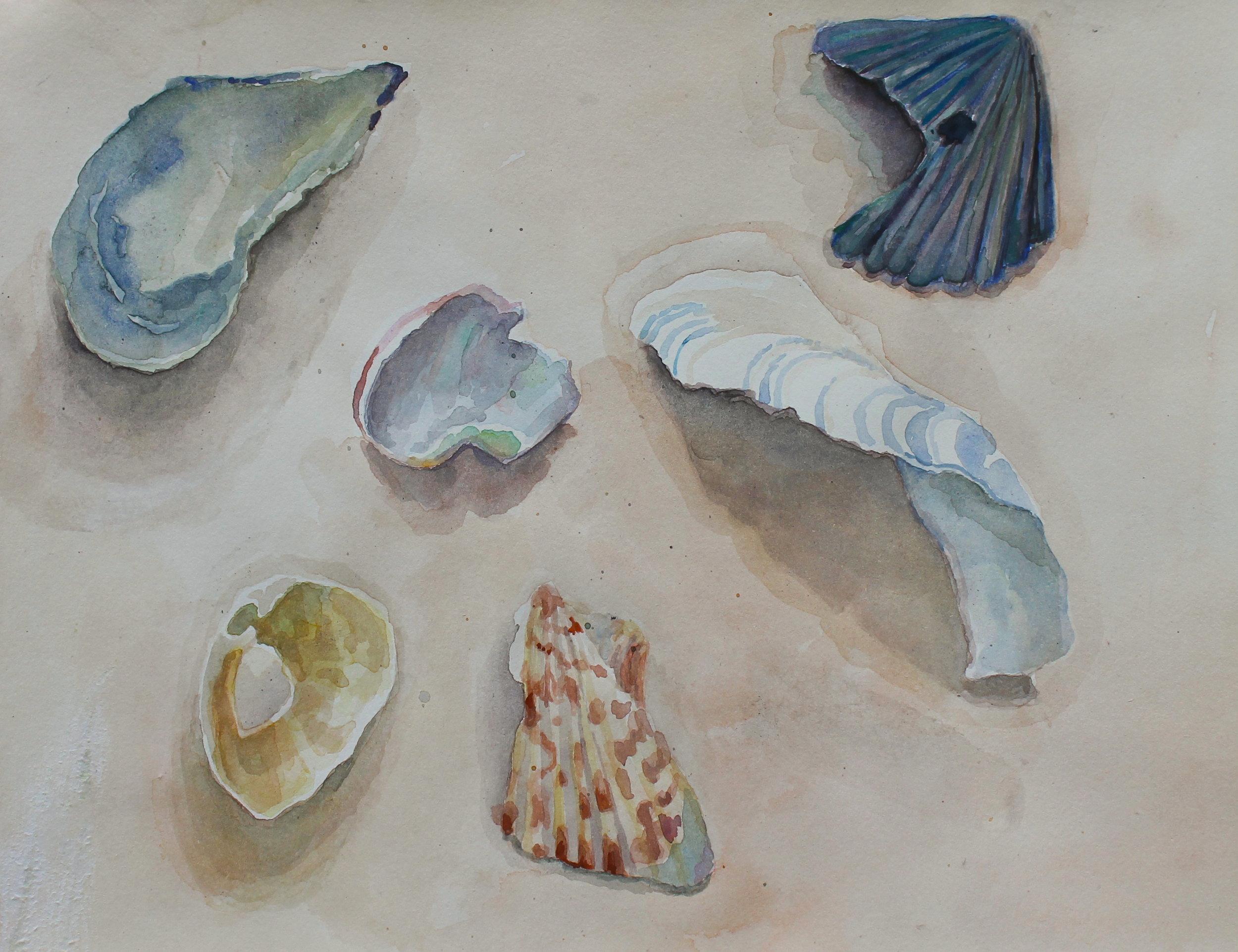 Sea shells, Watercolor, 8 x 10.5 in, 2015