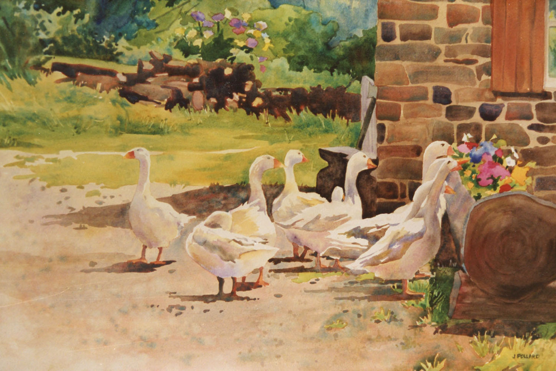 Swiss Geese