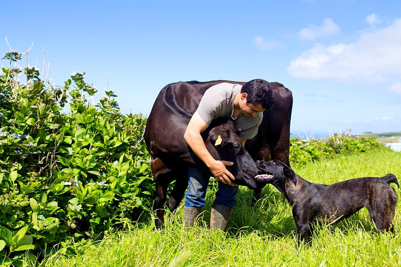 Farm-Tours-São- Miguel-Azores-Connections-6.jpeg